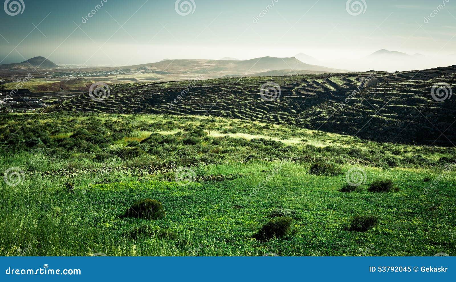 śródpolna zieleni krajobrazu góra