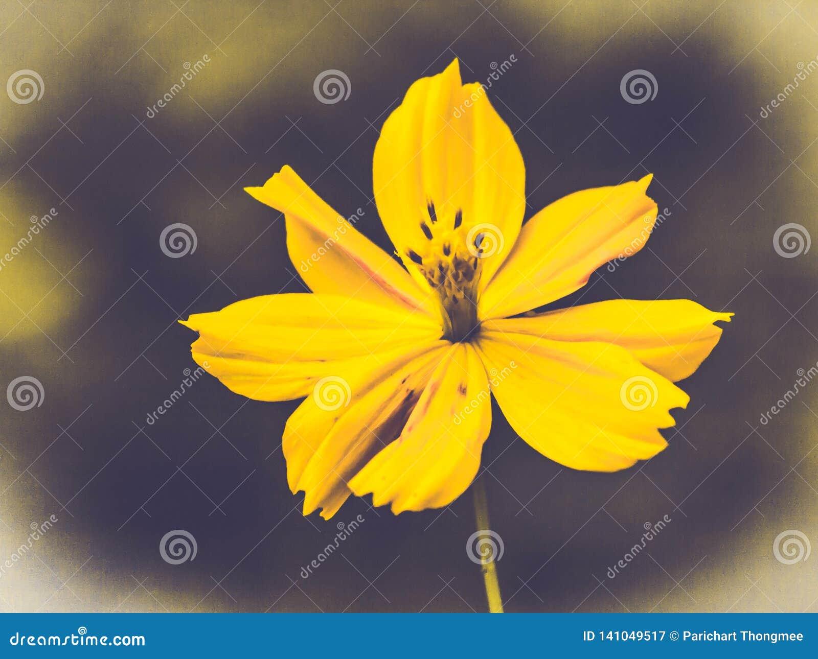 Śródpolny kosmosu kwiat dokąd słońce wzrasta Żółty brzmienie lato wiosny czas w kontekście niebieskie chmury odpowiadają trawy zi
