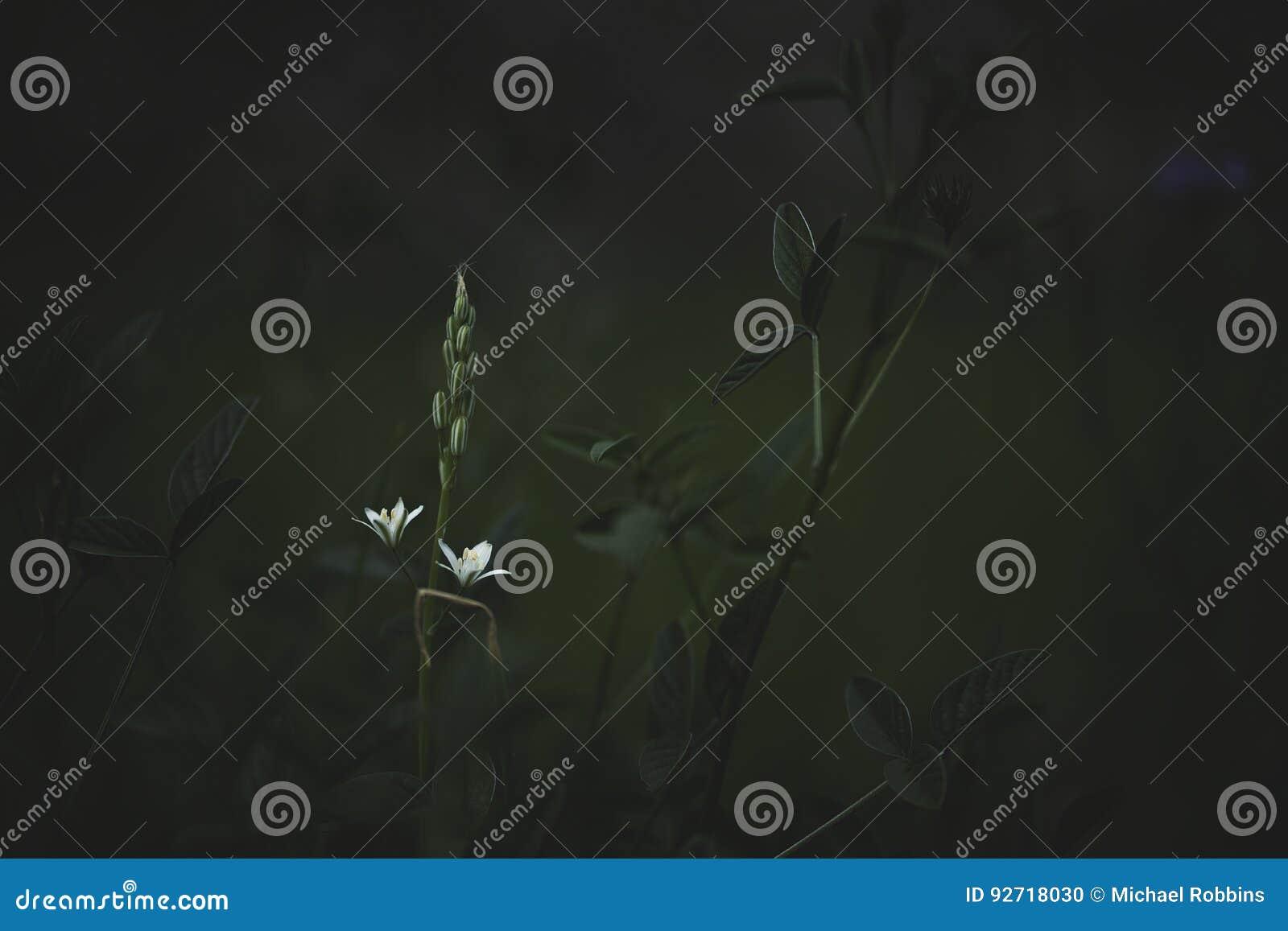 Śródziemnomorscy Wildflowers