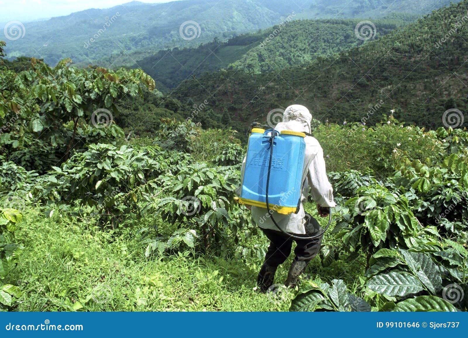 Średniorolne opryskiwanie kawy rośliny w halnej scenerii