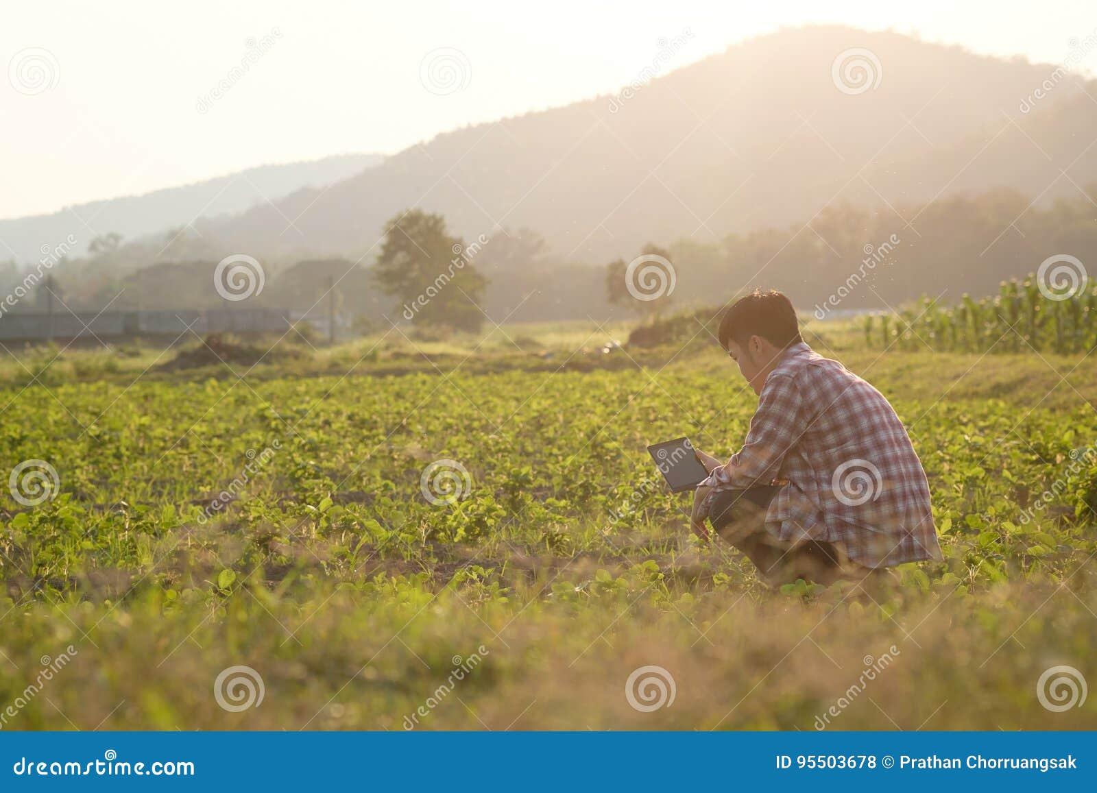 Średniorolny mężczyzna czytający lub analiza raport w pastylka komputerze