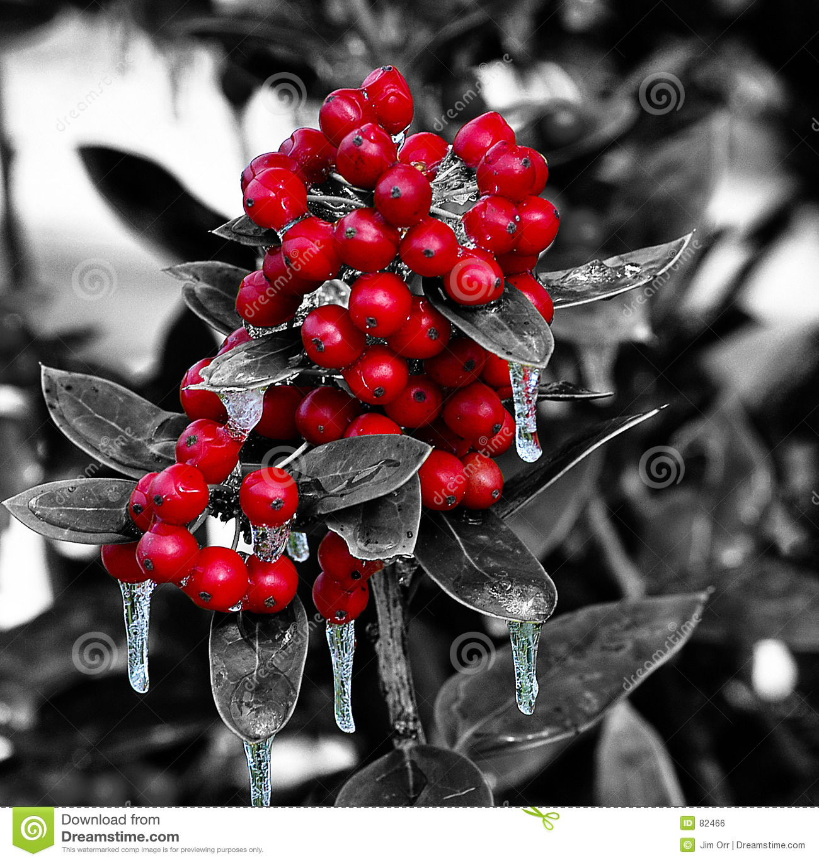 Święta jagodowe