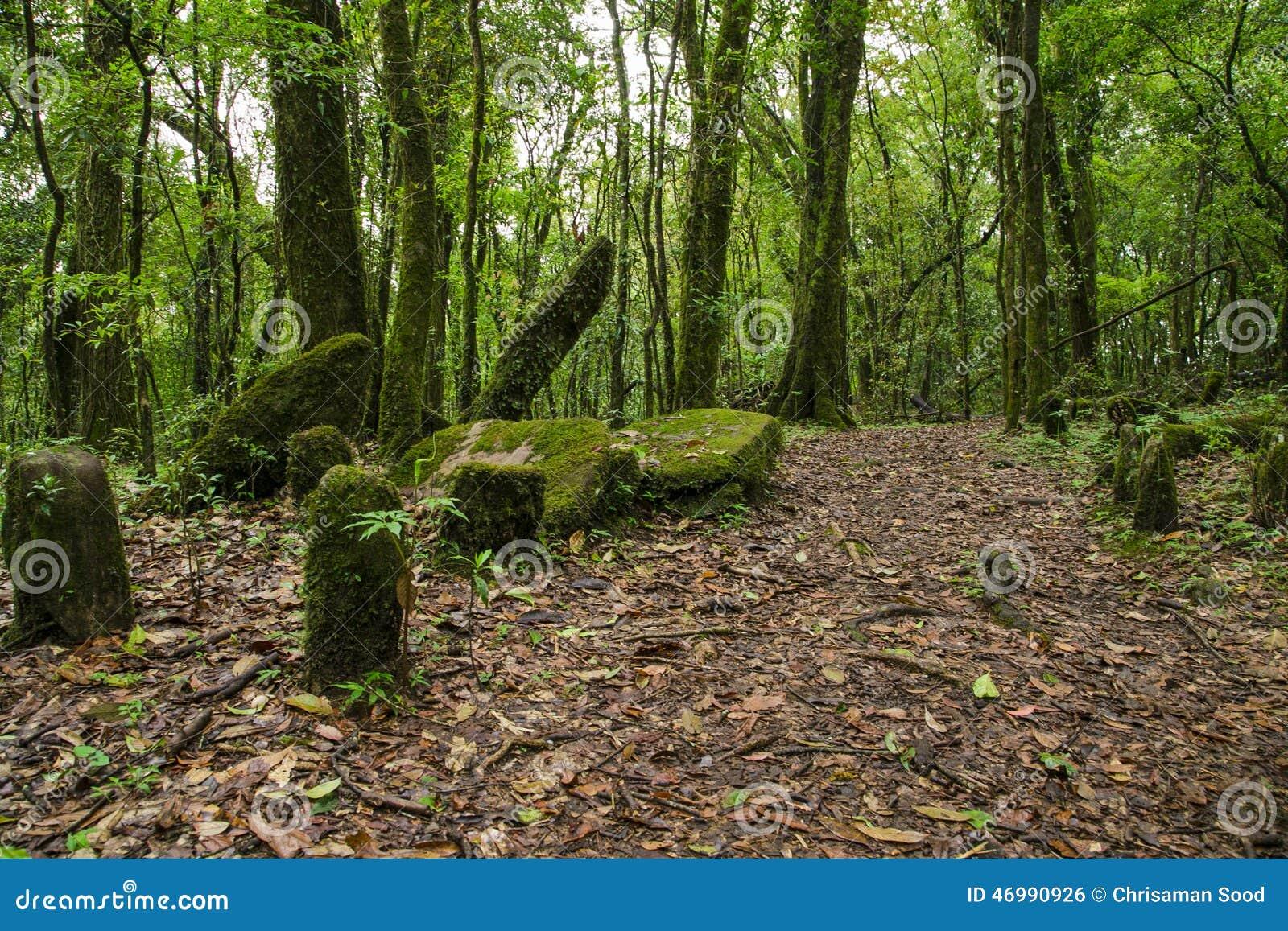 Święty lasowy mawphlang