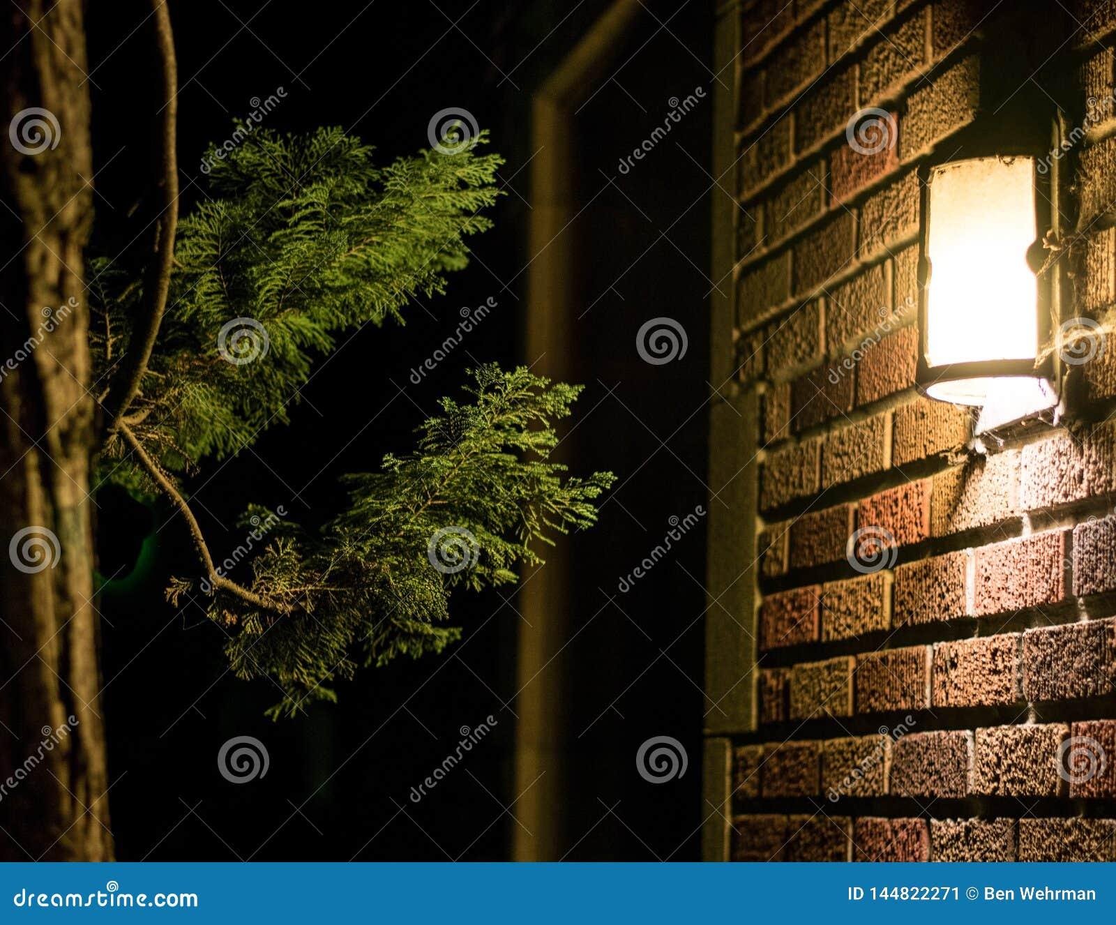 Światło i drzewo na ścianie z cegieł