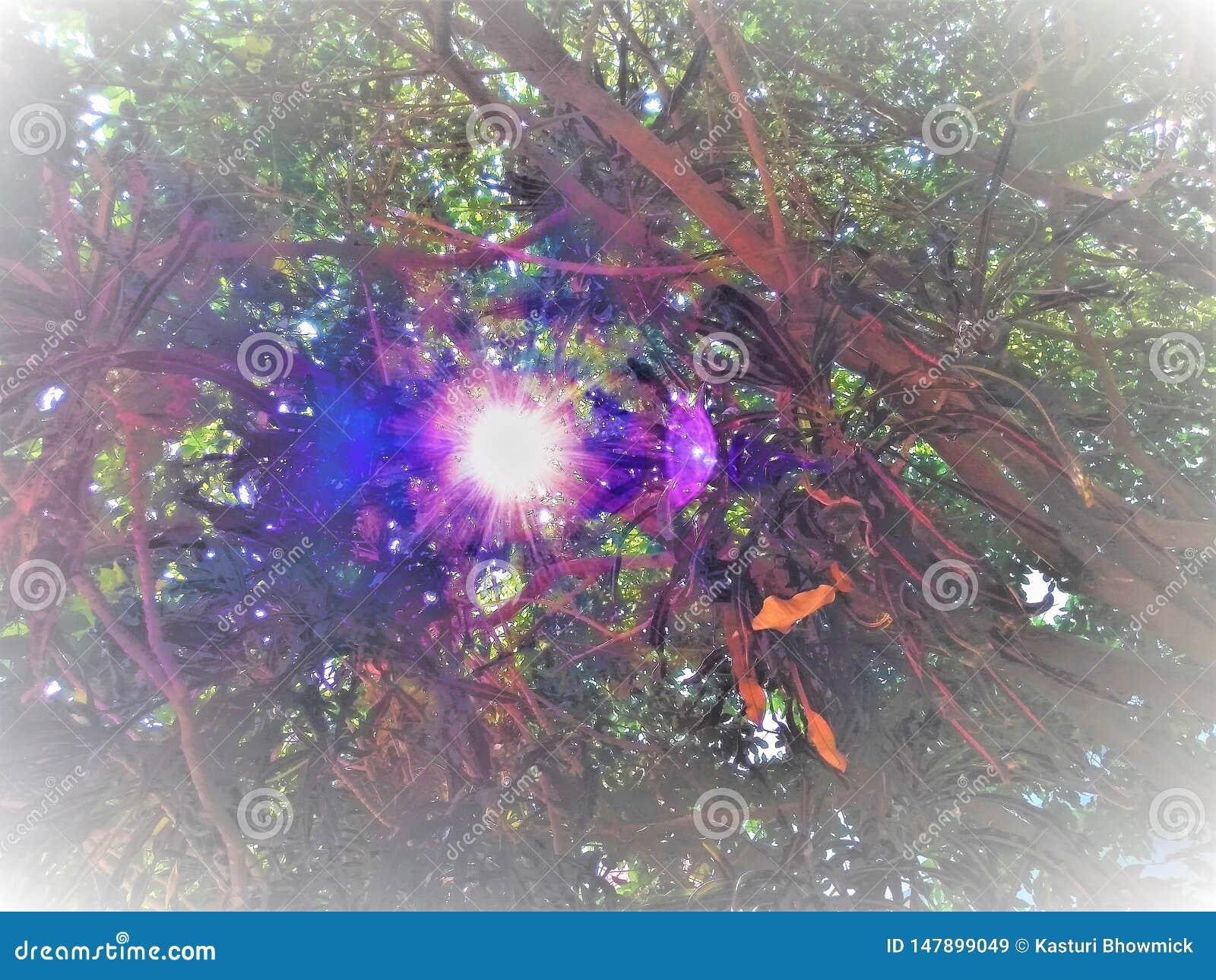 Światło słoneczne nadchodzący za przerwie drzewa od