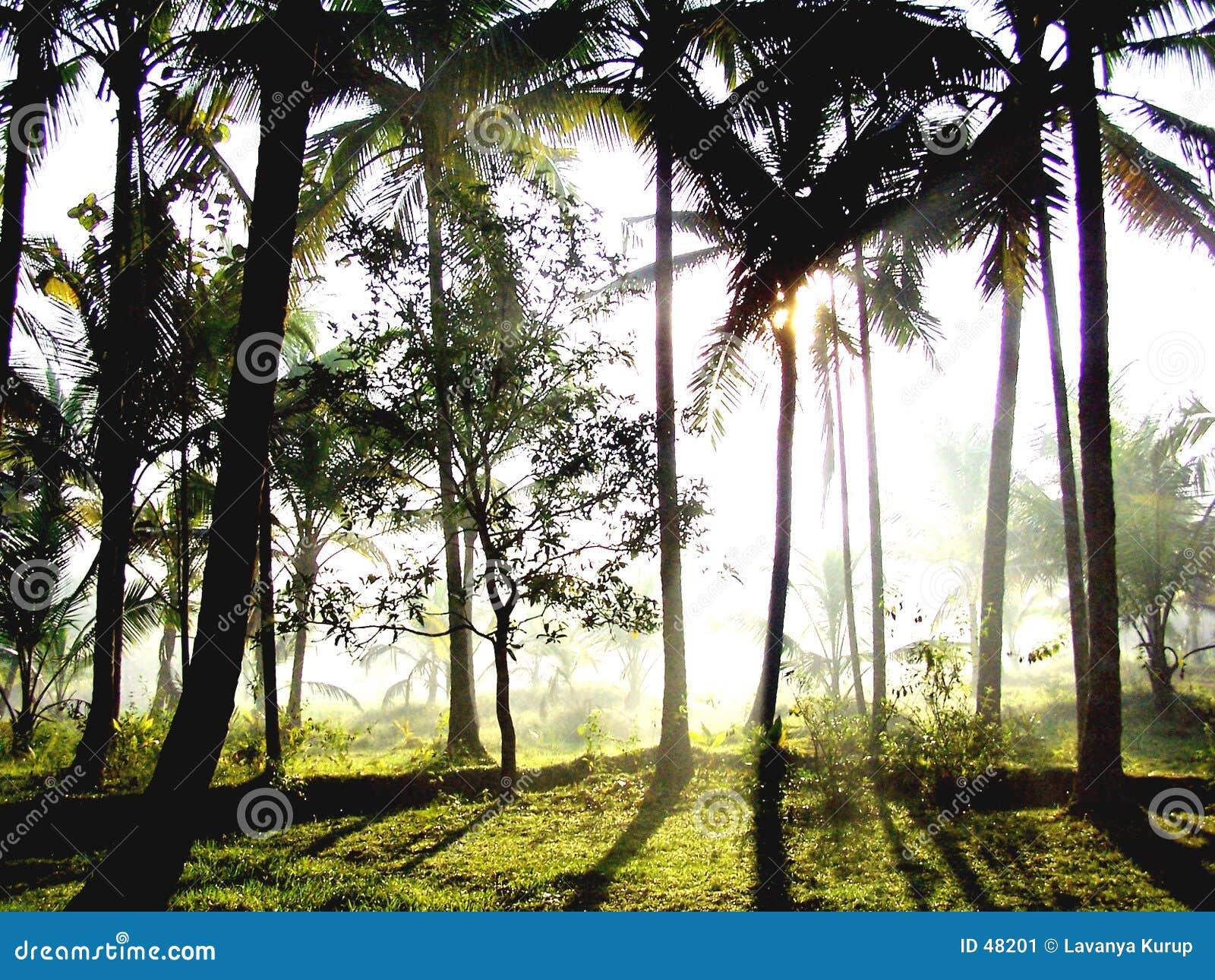 świateł słoneczne lasu