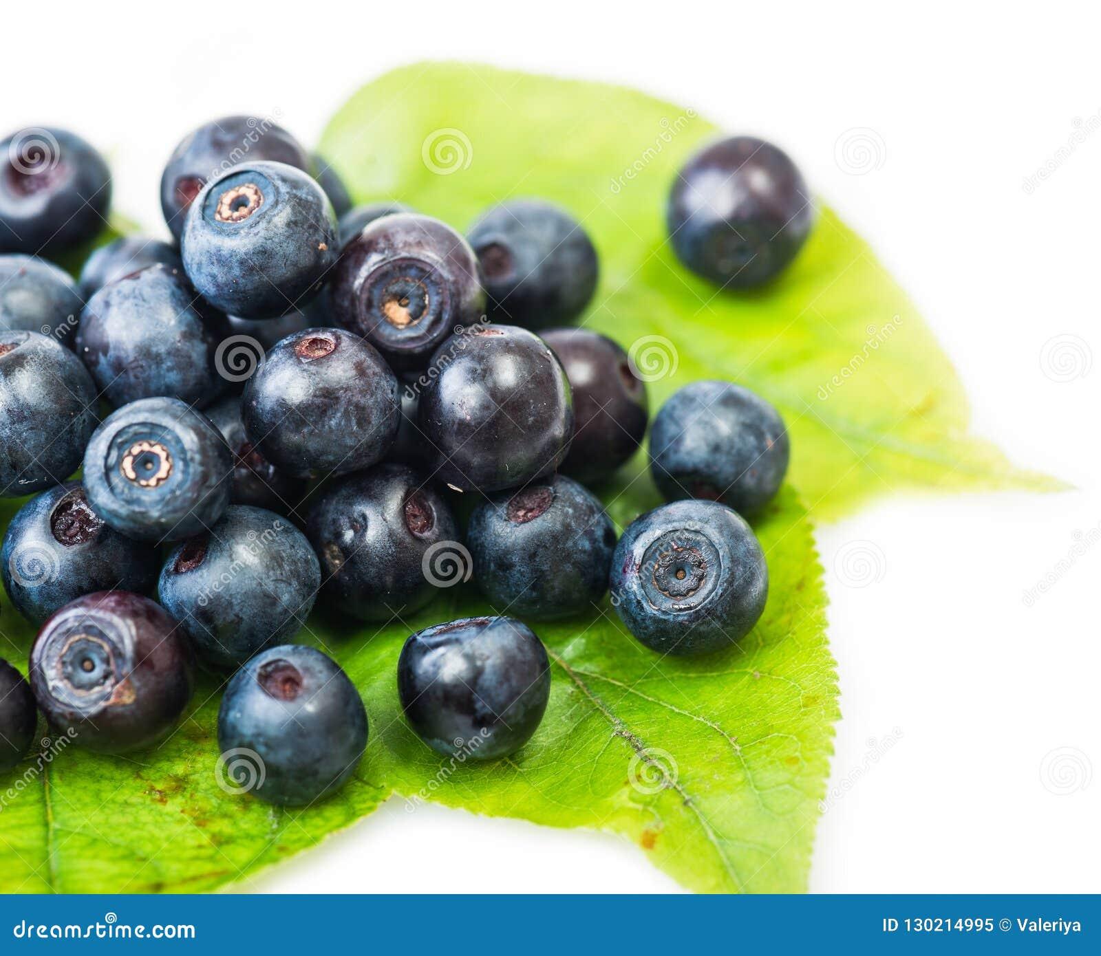 Świeża czarna jagoda na zielonych liściach