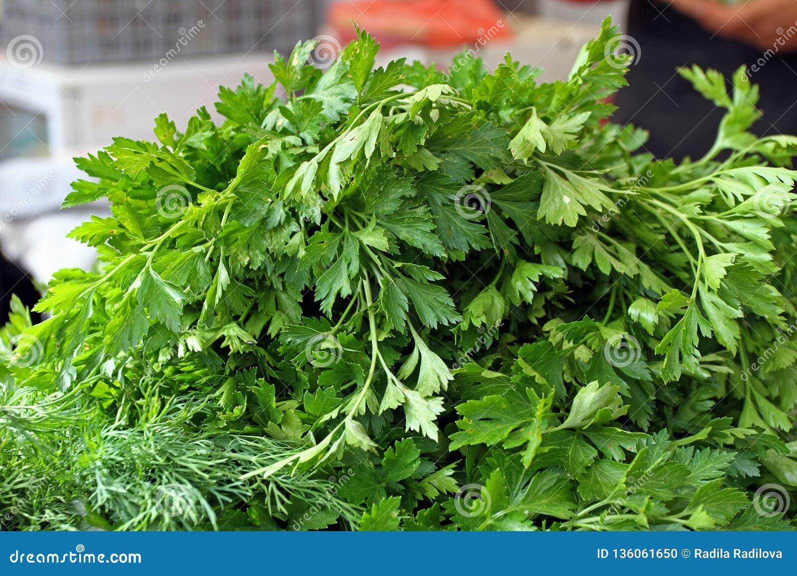 świeża organicznie pietruszka Pietruszki tła tekstura Warzywo wzór Zielona koperkowa tapeta zielony zioła Zdrowy Karmowy łasowani