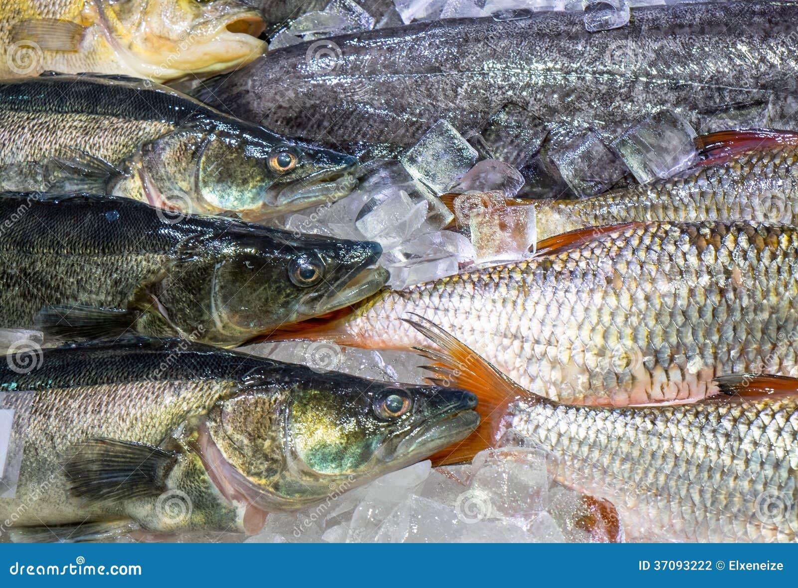 Download Świeża Ryba Na Lodzie Dla Sprzedaży Zdjęcie Stock - Obraz złożonej z natura, grecja: 37093222