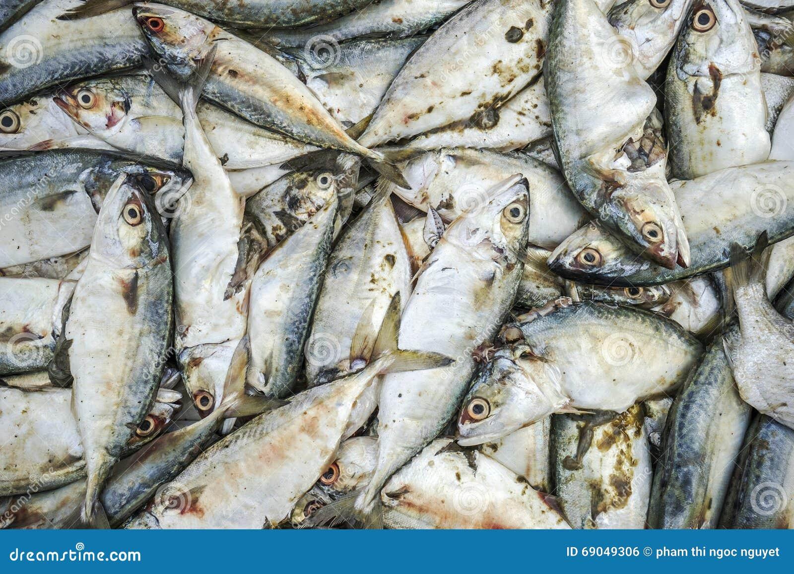 Świeża ryba przy Tęsk Hai rybim rynkiem