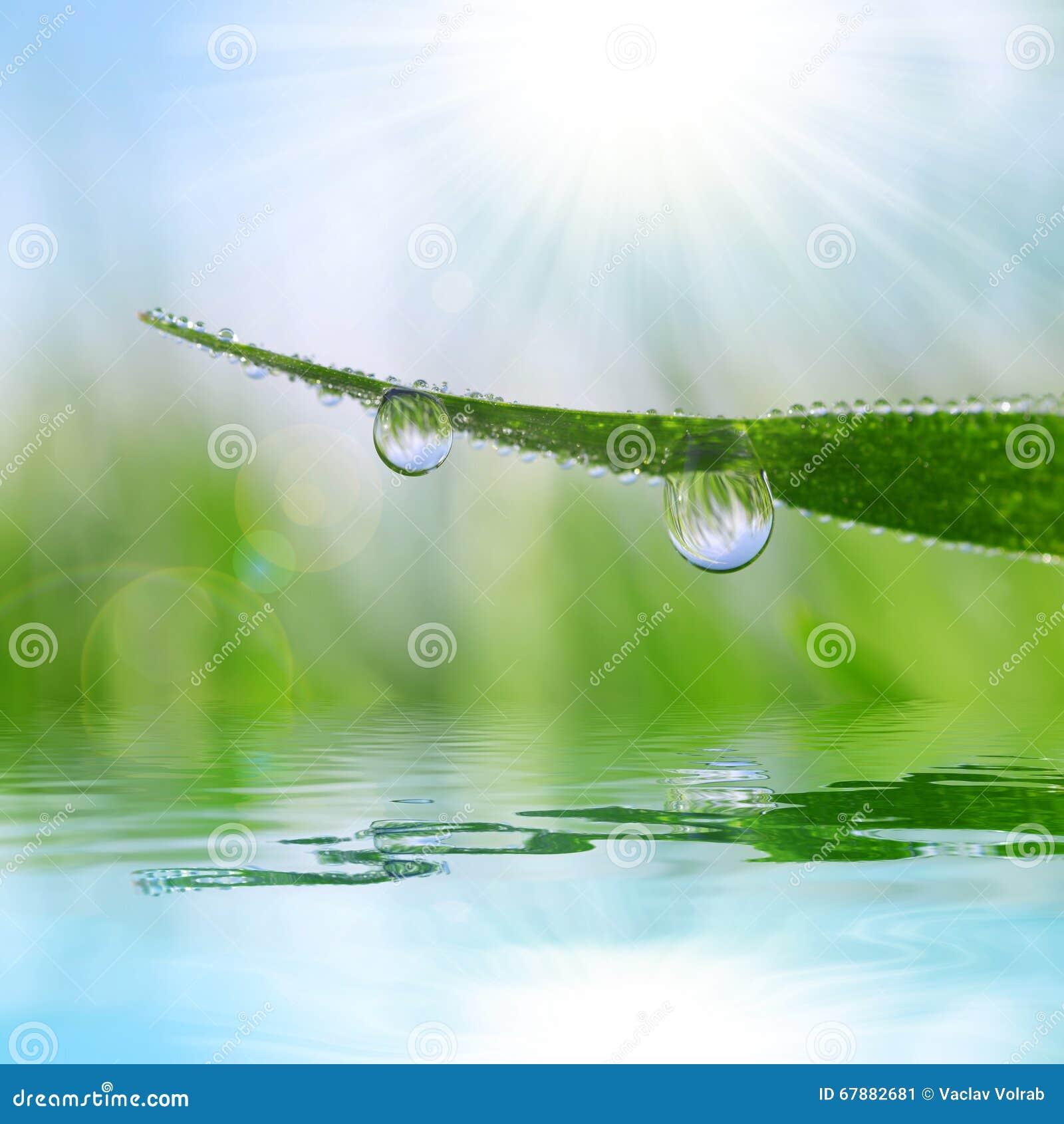 Świeża trawa z rosa kropel zbliżeniem