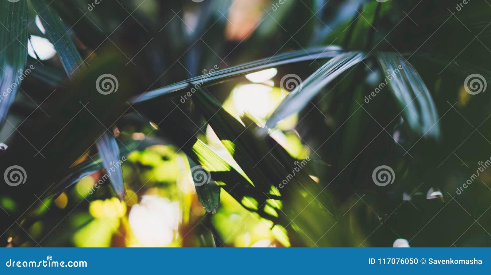 Świeża zdrowa życiorys tło plama naturalna z abstrakt zamazującym ulistnieniem i jaskrawy lato migoczemy światła słonecznego tło