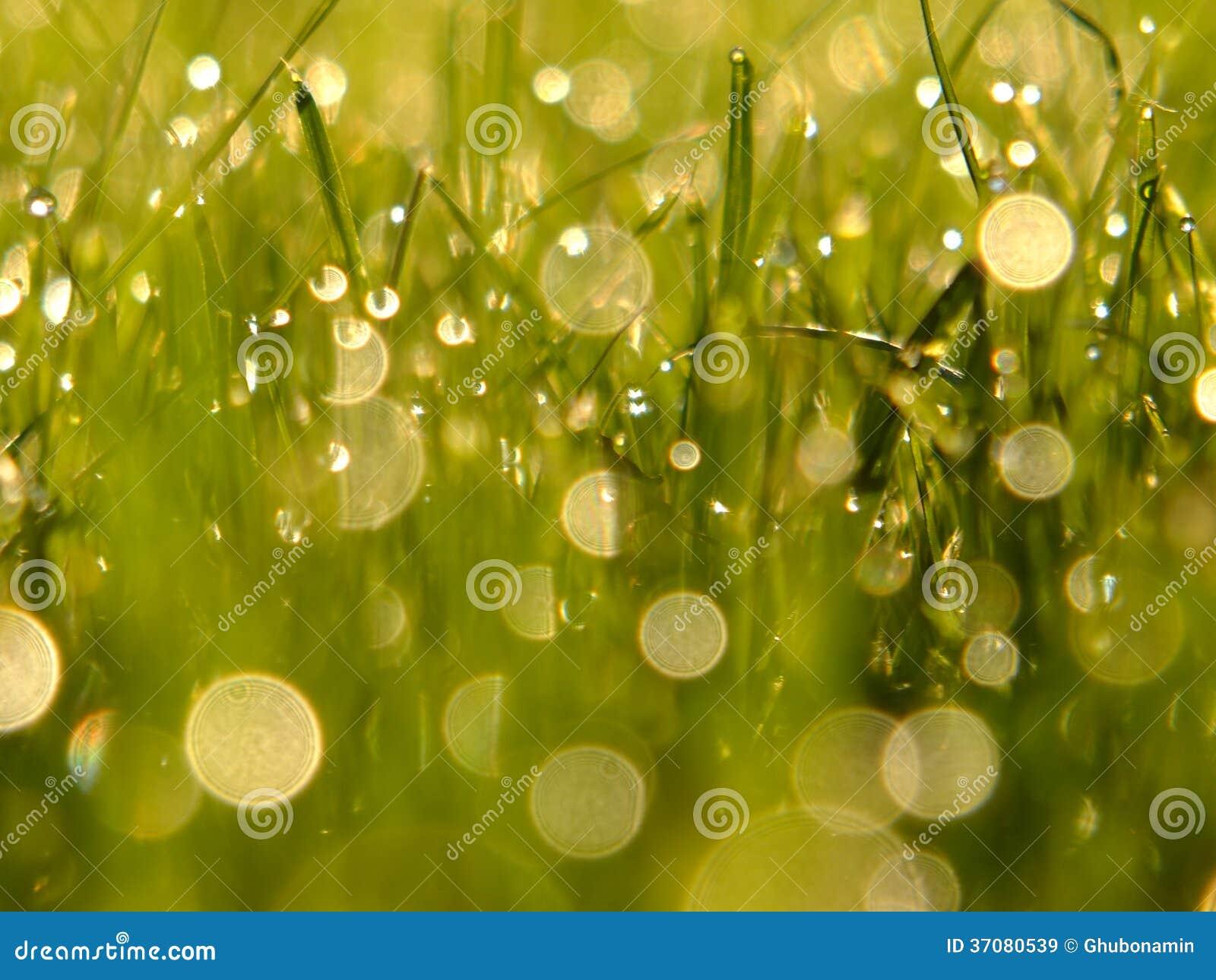 Download Świeża zielona trawa obraz stock. Obraz złożonej z fielder - 37080539