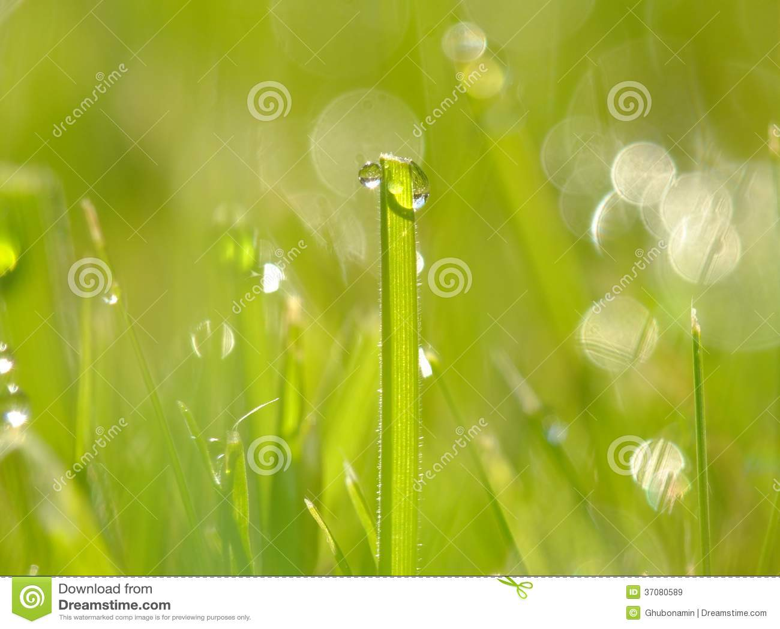 Download Świeża zielona trawa obraz stock. Obraz złożonej z krajobraz - 37080589