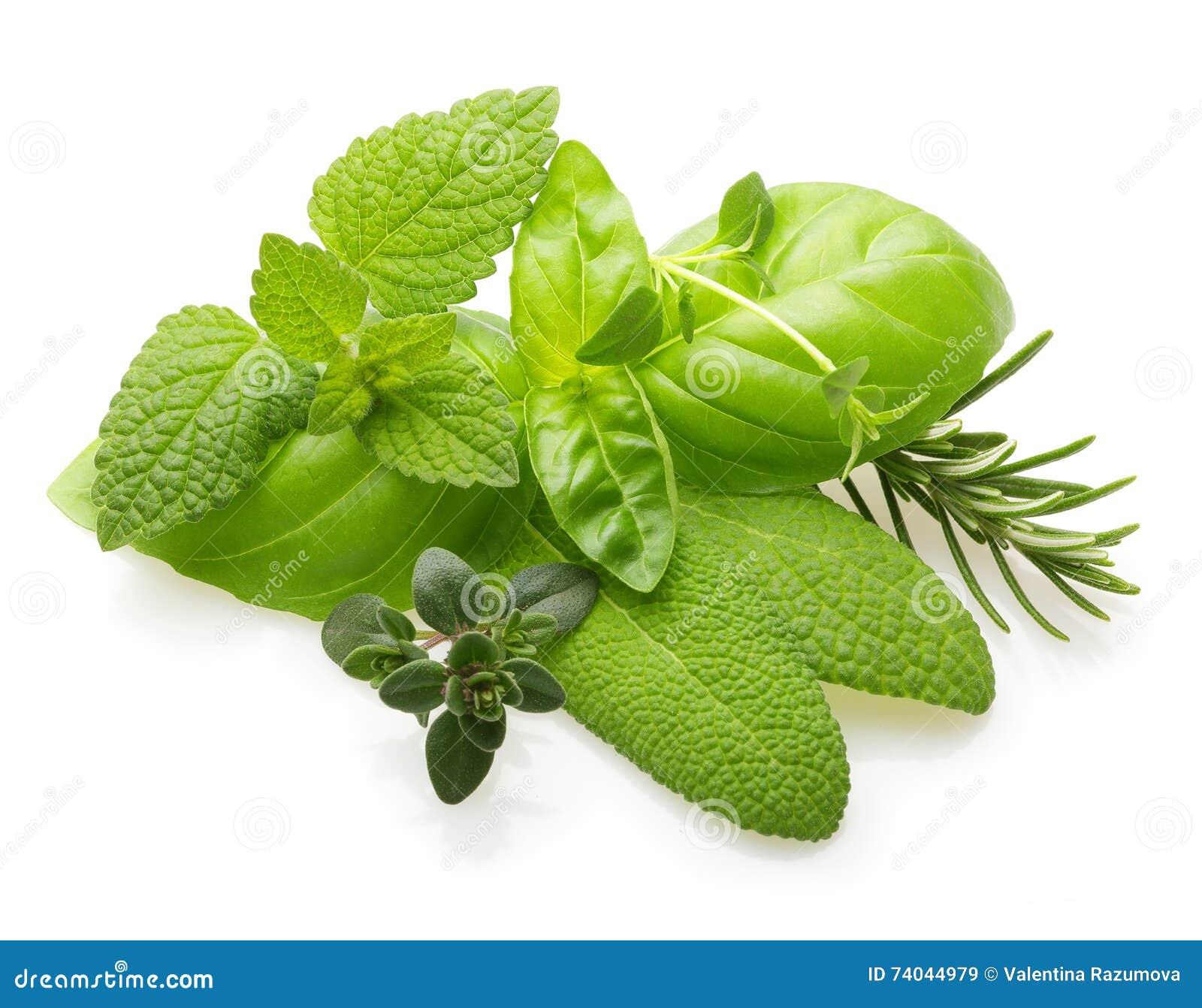 Świeże pikantność i ziele odizolowywający