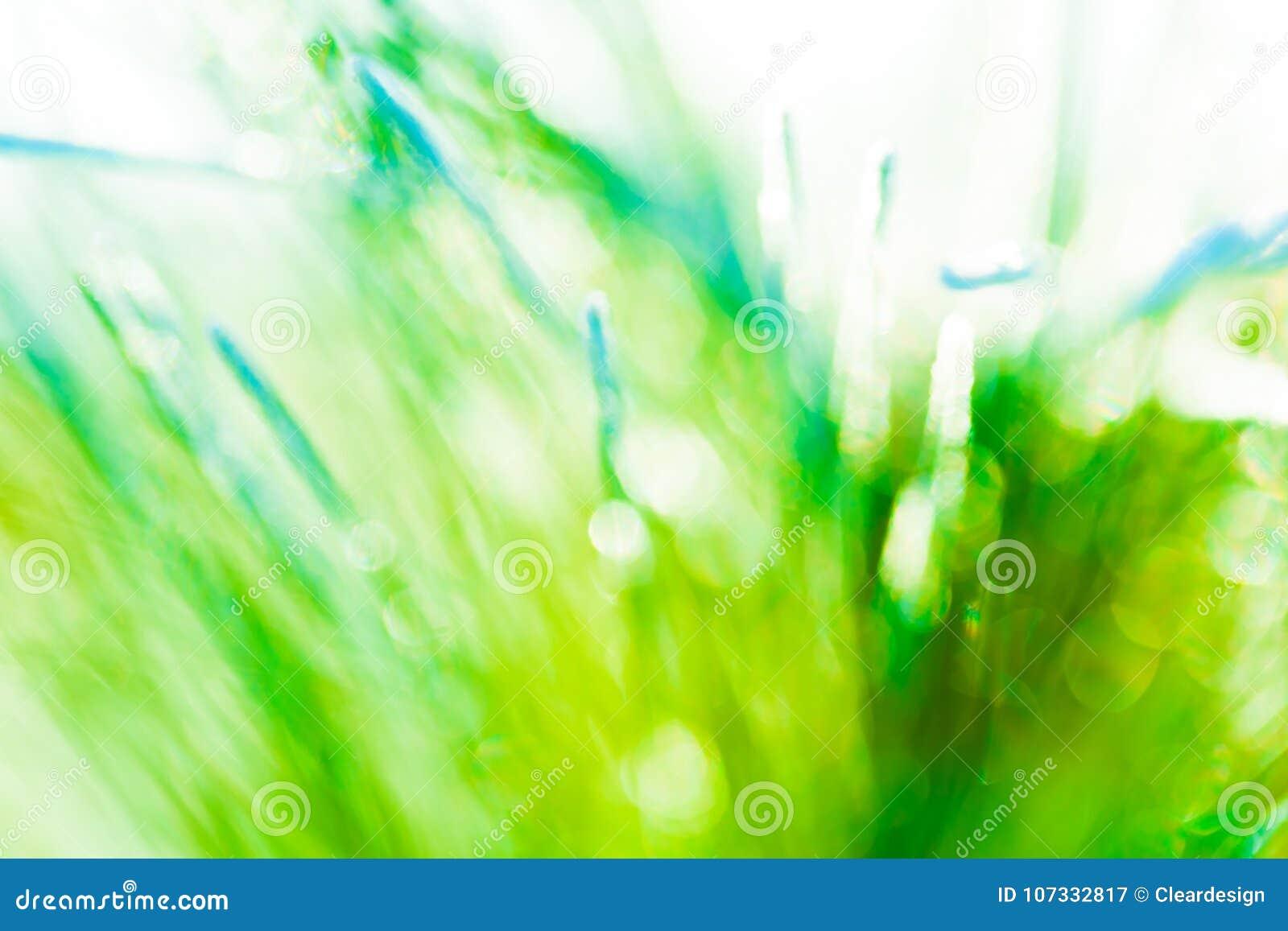 Świeżej zielonej wiosny tła abstrakcjonistyczna tekstura