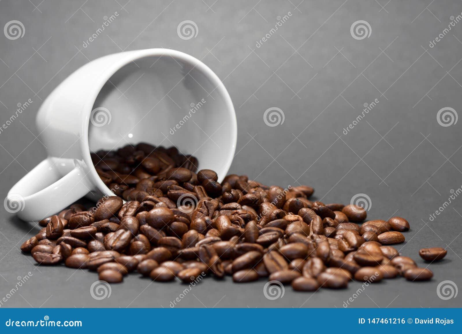 Świeżo mleć piec kawowe fasole z owoc kawowa roślina z czarnym tłem
