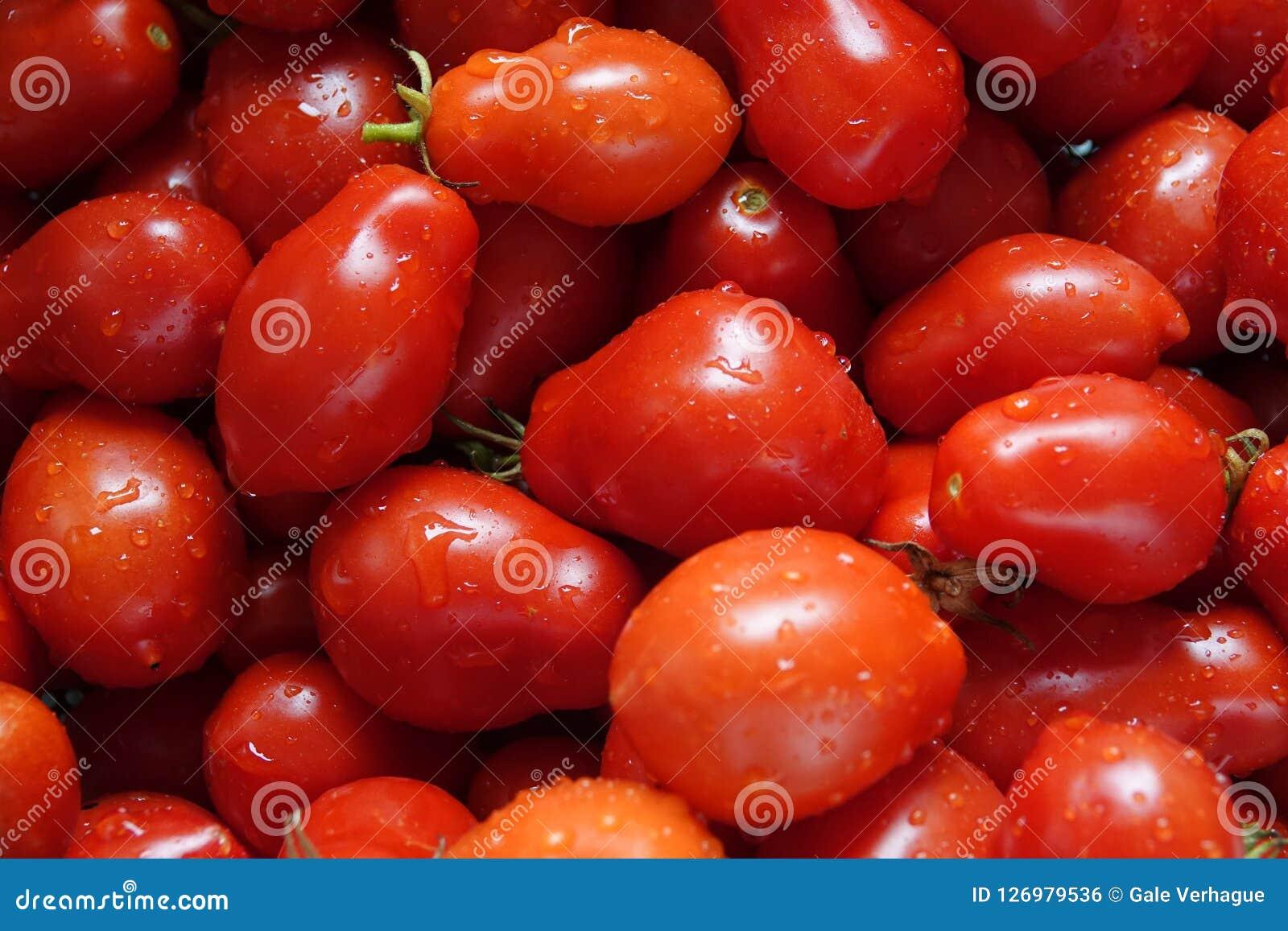 Świeżo Podnoszący i Myjący Roma pomidory