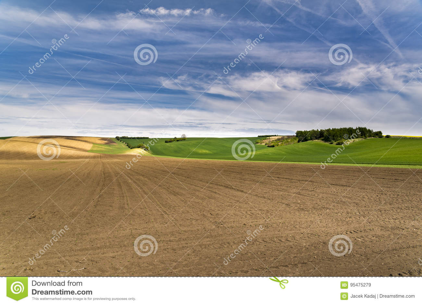 Świeżo siający rolnictwo mlejący z falistymi łąkami