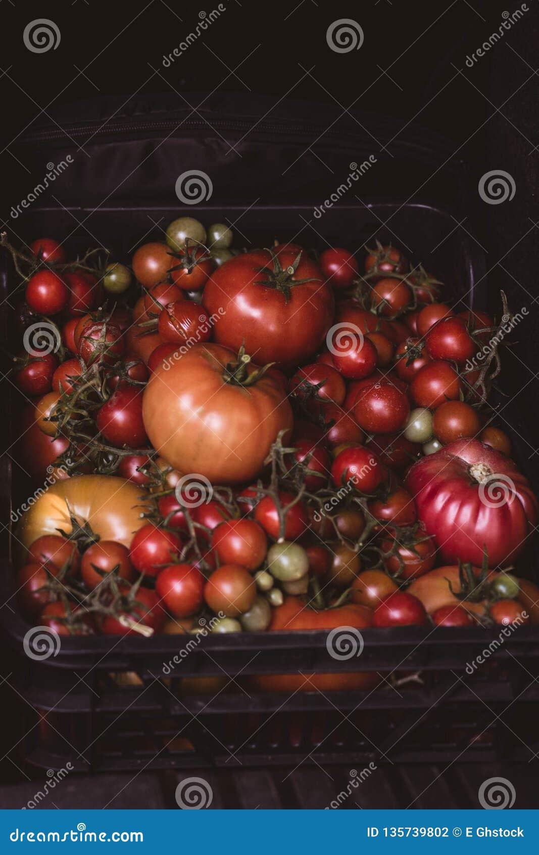 świeżo ukradzeni pomidory faszerujący w pudełku