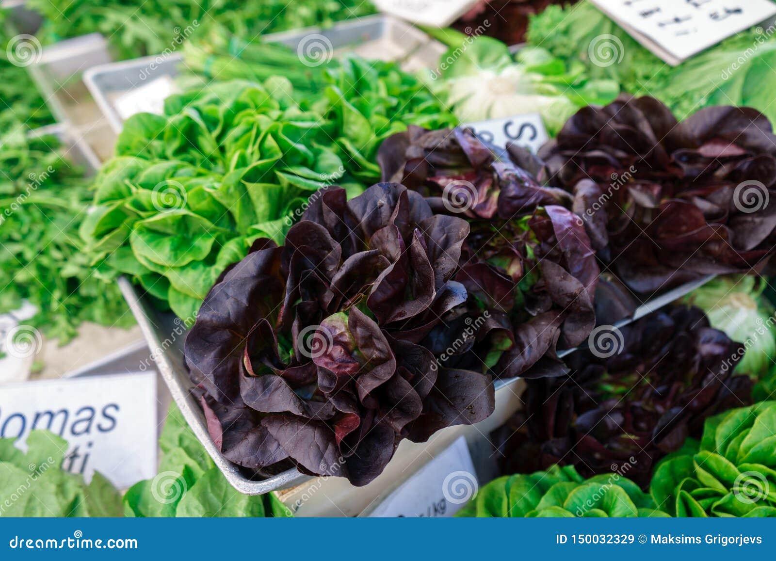 Świeżo ukradzione całe sałat rozmaitość na rolnika rynku