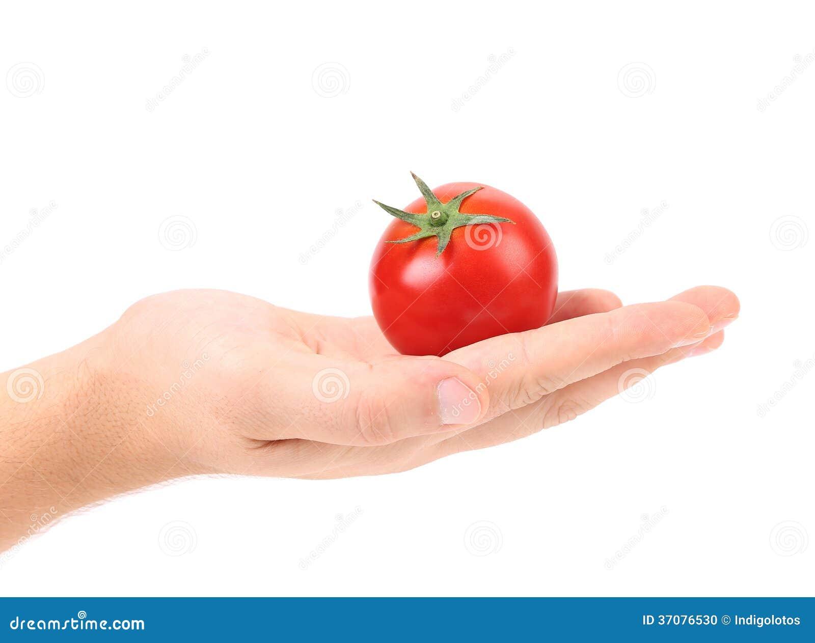 Download Świeży pomidor na ręce. zdjęcie stock. Obraz złożonej z jadalny - 37076530