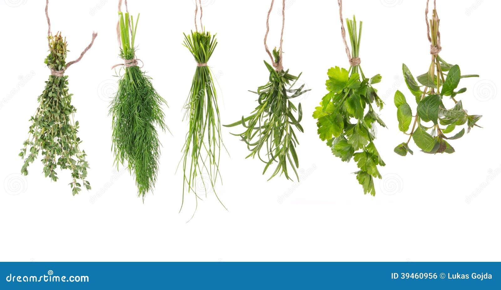 Świeży ziele wieszać