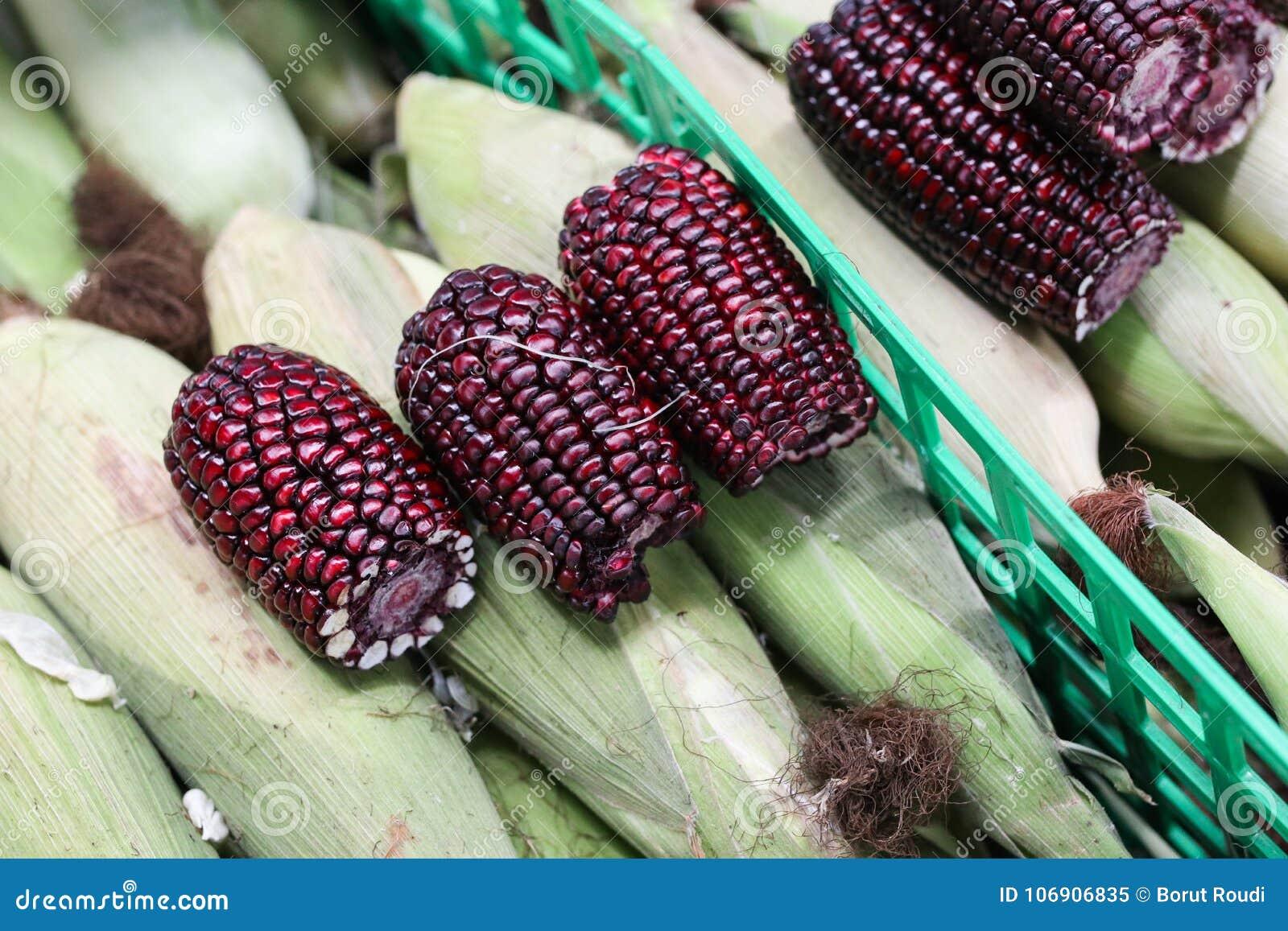 Świeży zmrok - czerwona woskowata kukurudza