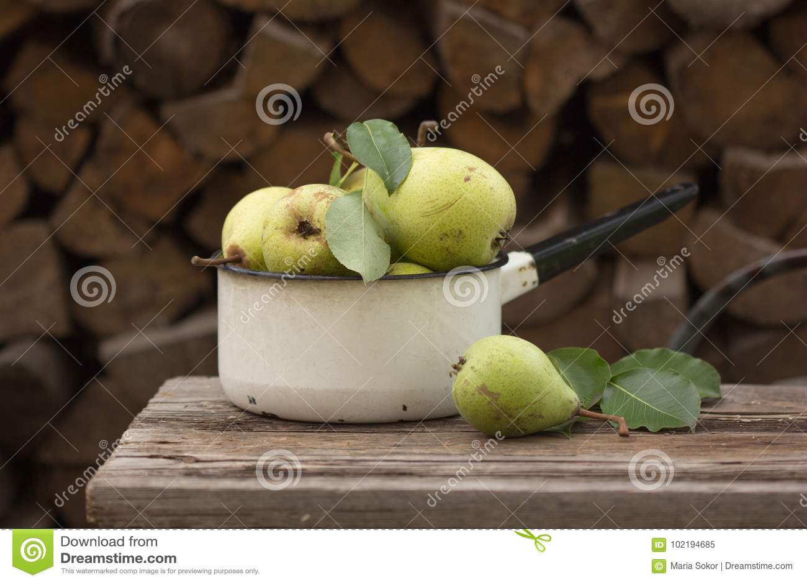 Świezi dojrzali jabłka w naczyniu Zrywań jabłka w lato sadzie Organicznie owoc i warzywo