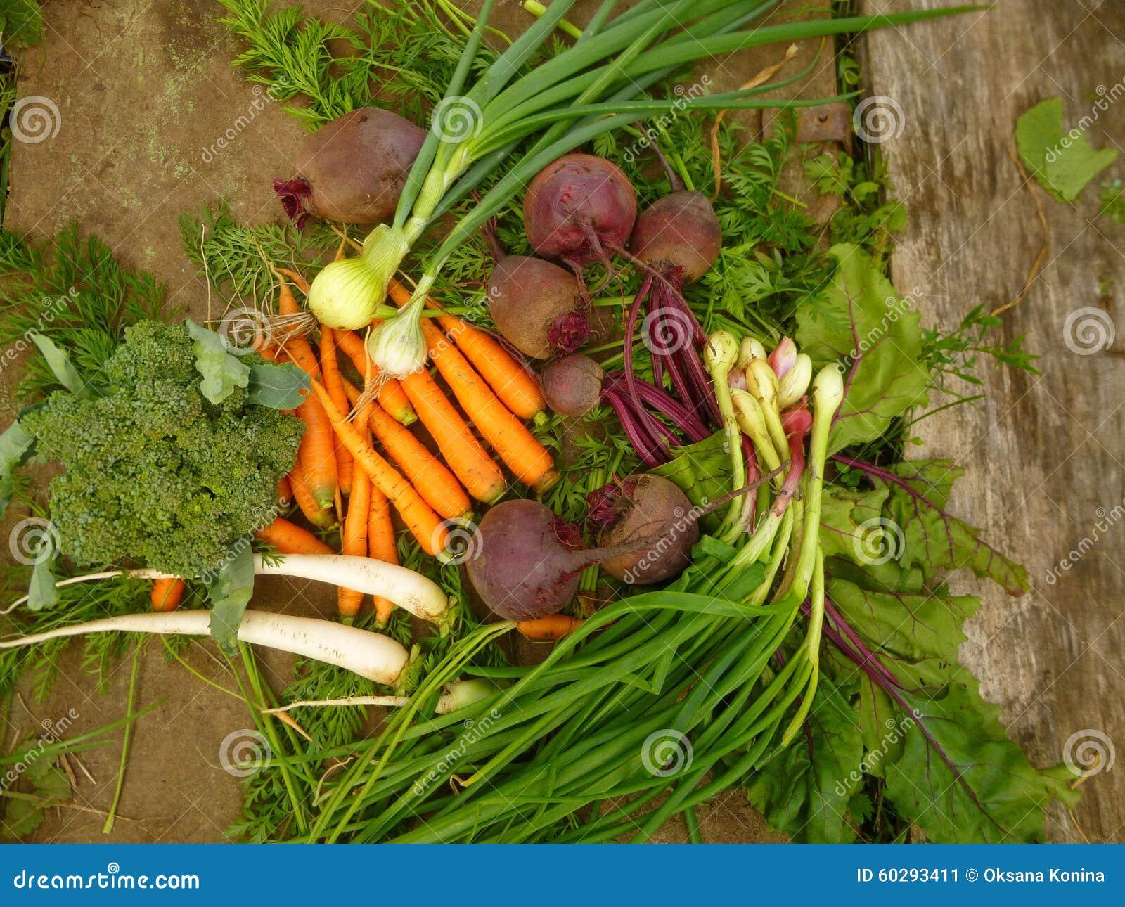 Świezi warzywa: cebula, buraki, marchewki, kalafior, rzodkiew