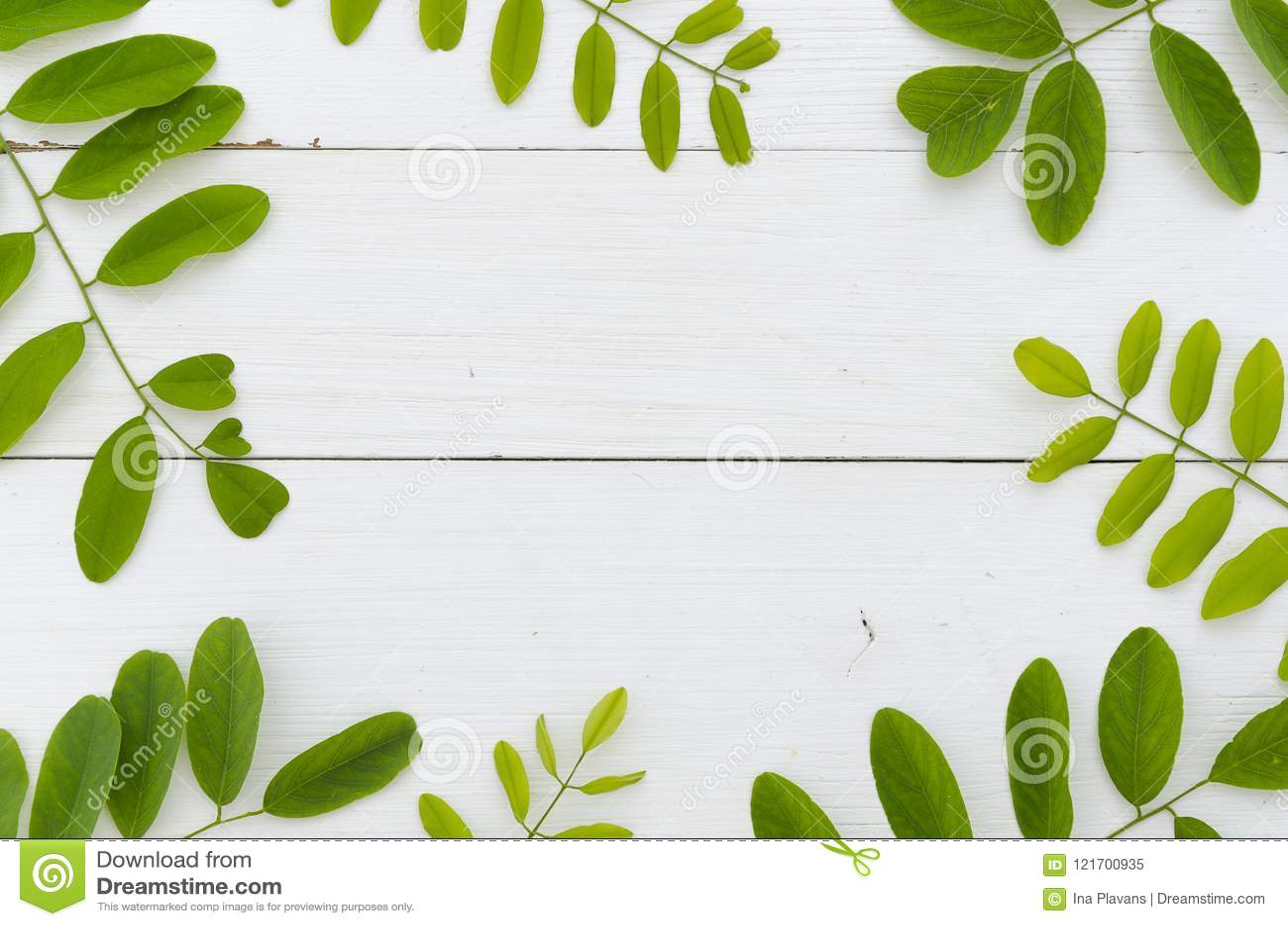 Świezi zieleni liście akacja na białym drewnianym tle Mieszkania nieatutowy ramowy mockup