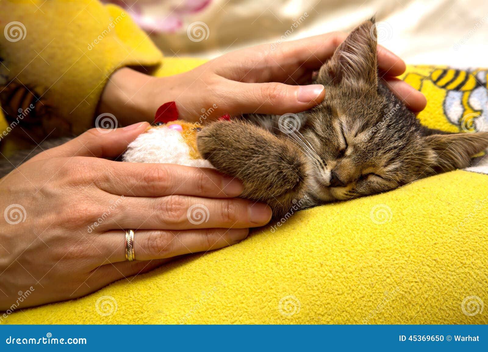 女孩爱抚逗人喜爱的睡觉小猫