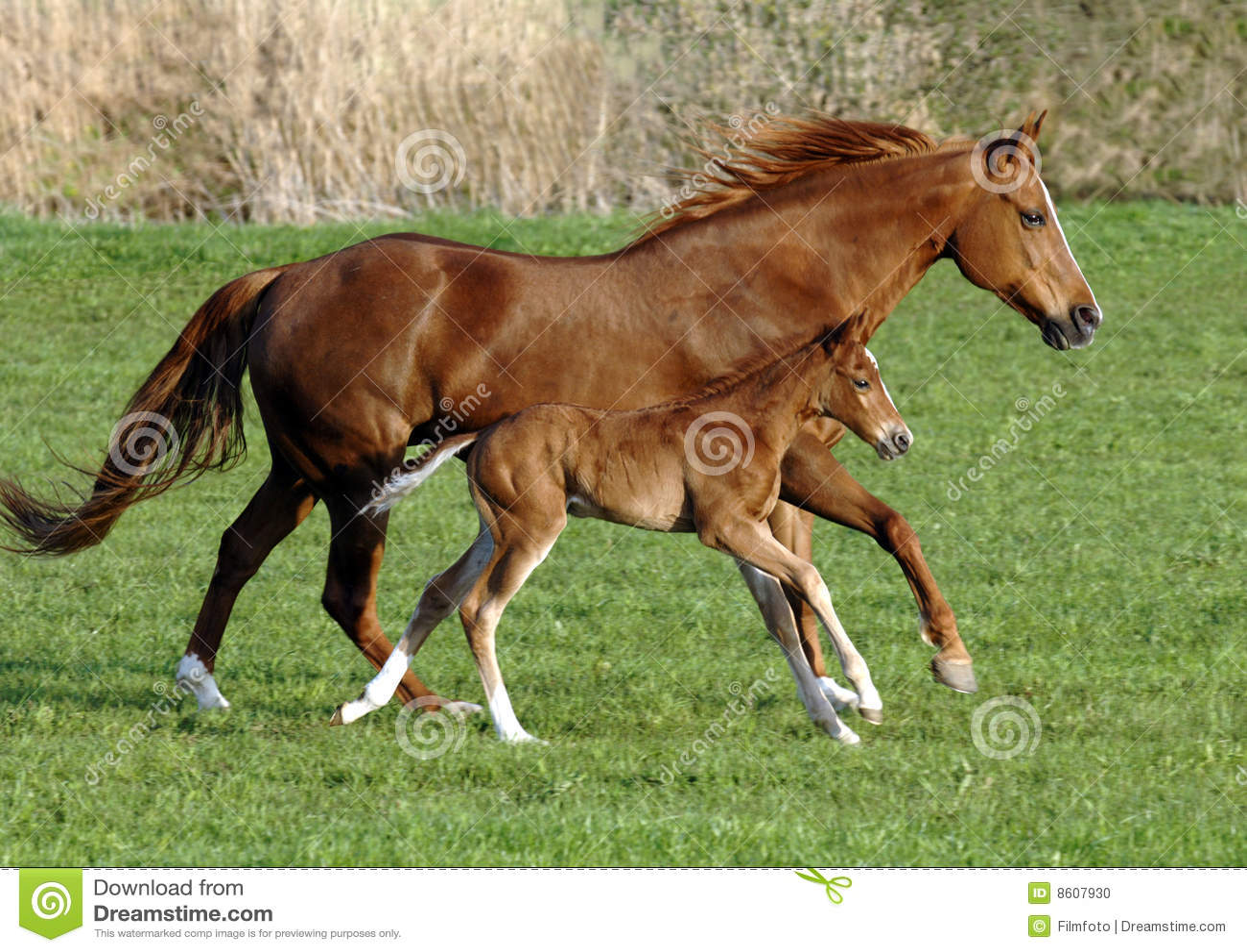 źrebię koń