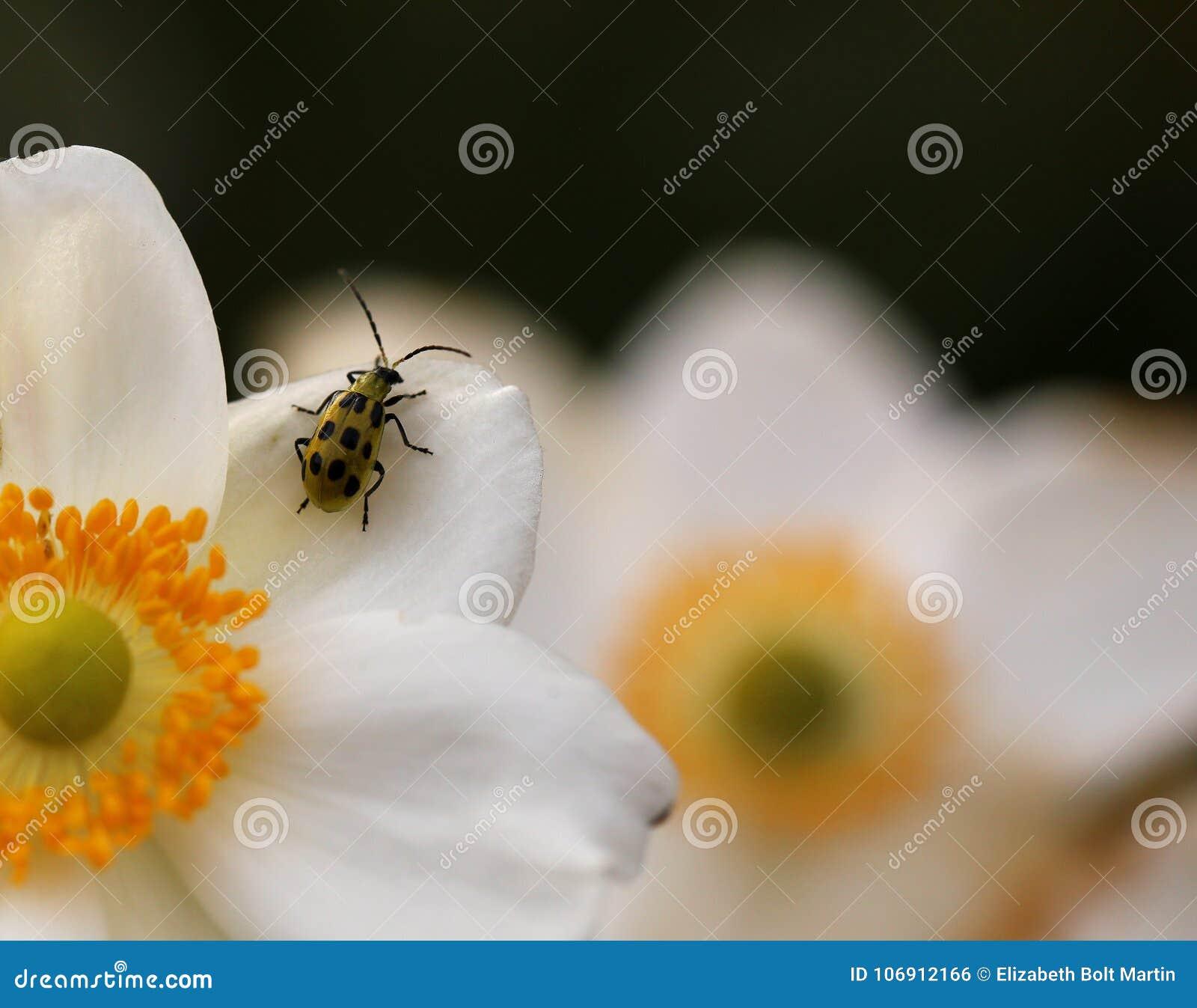 Żółta ściga w kwiatu ogródzie