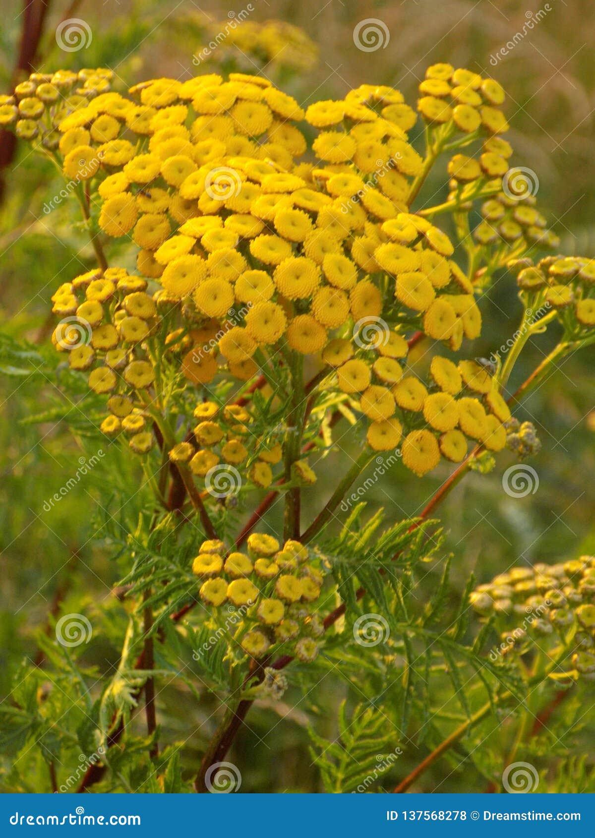 Żółty kwiatu nastrój na dobre