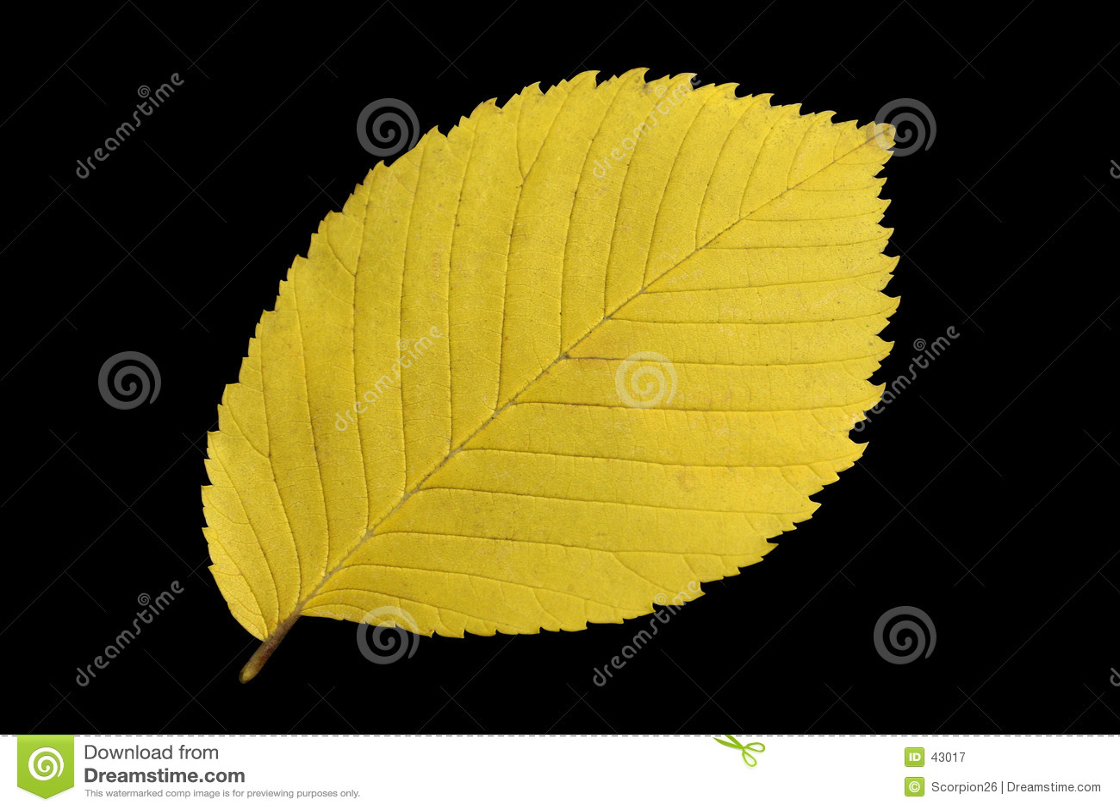 Żółty liści jesienią
