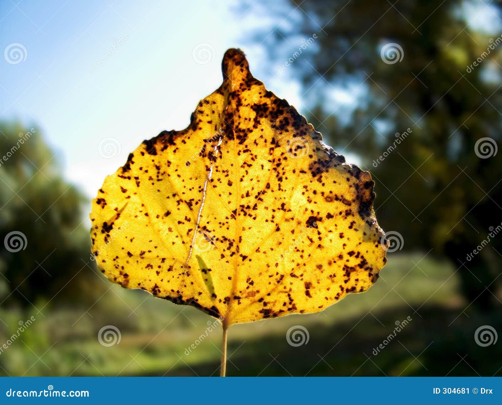 Żółty upadłych liści