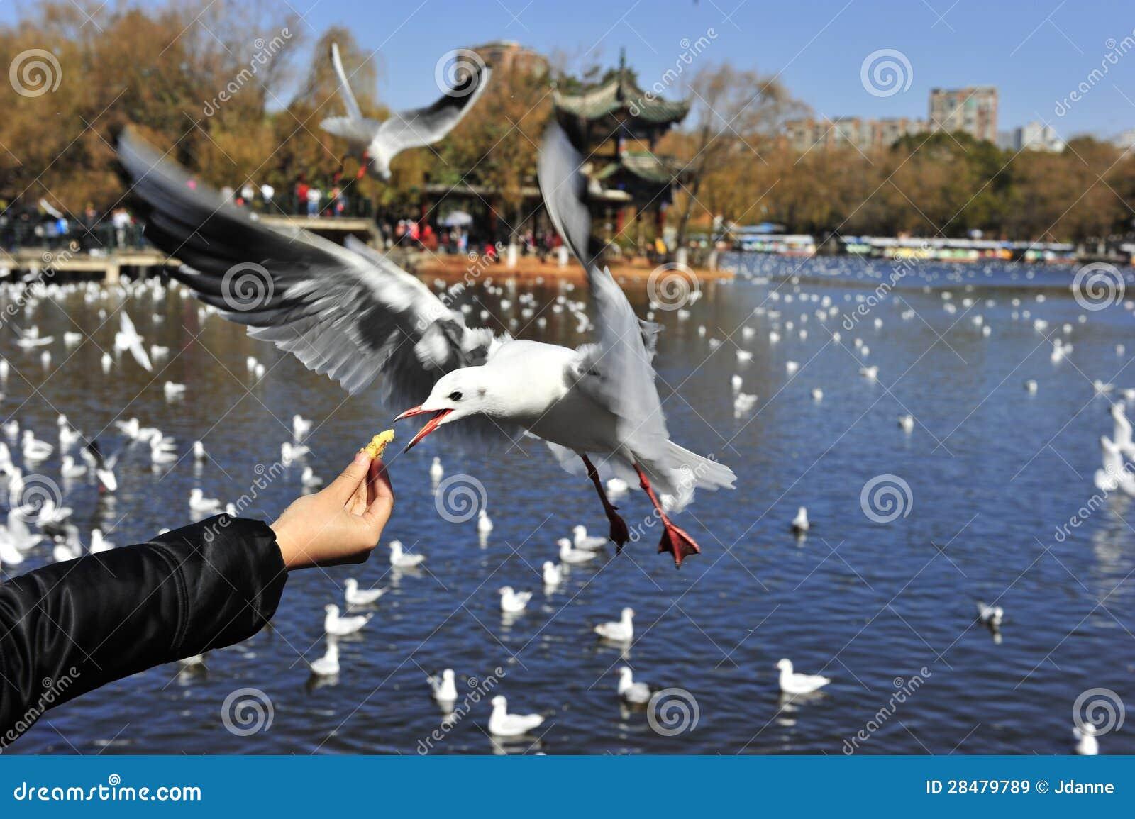 Żądny Seagull