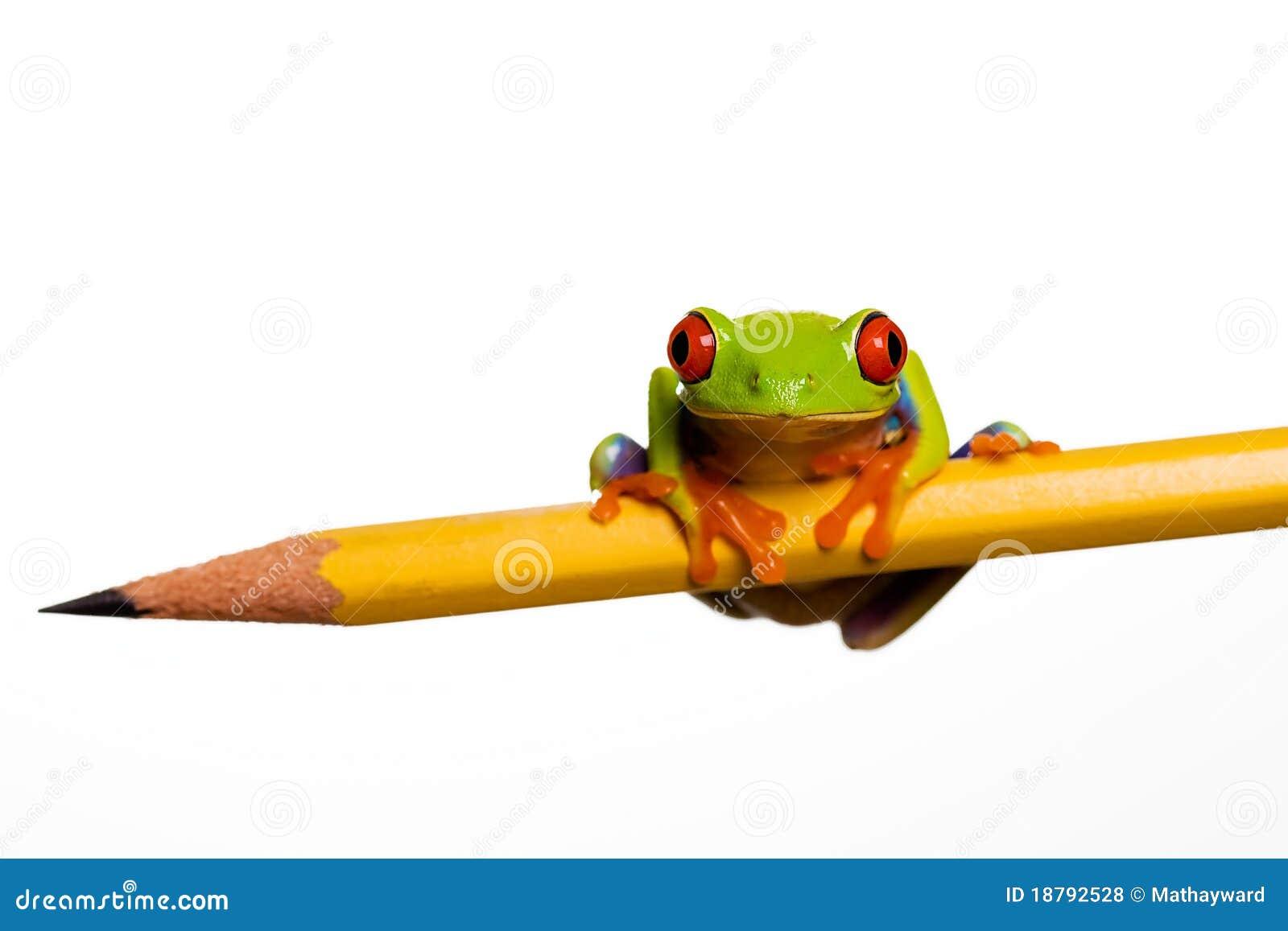 żaba ołówek