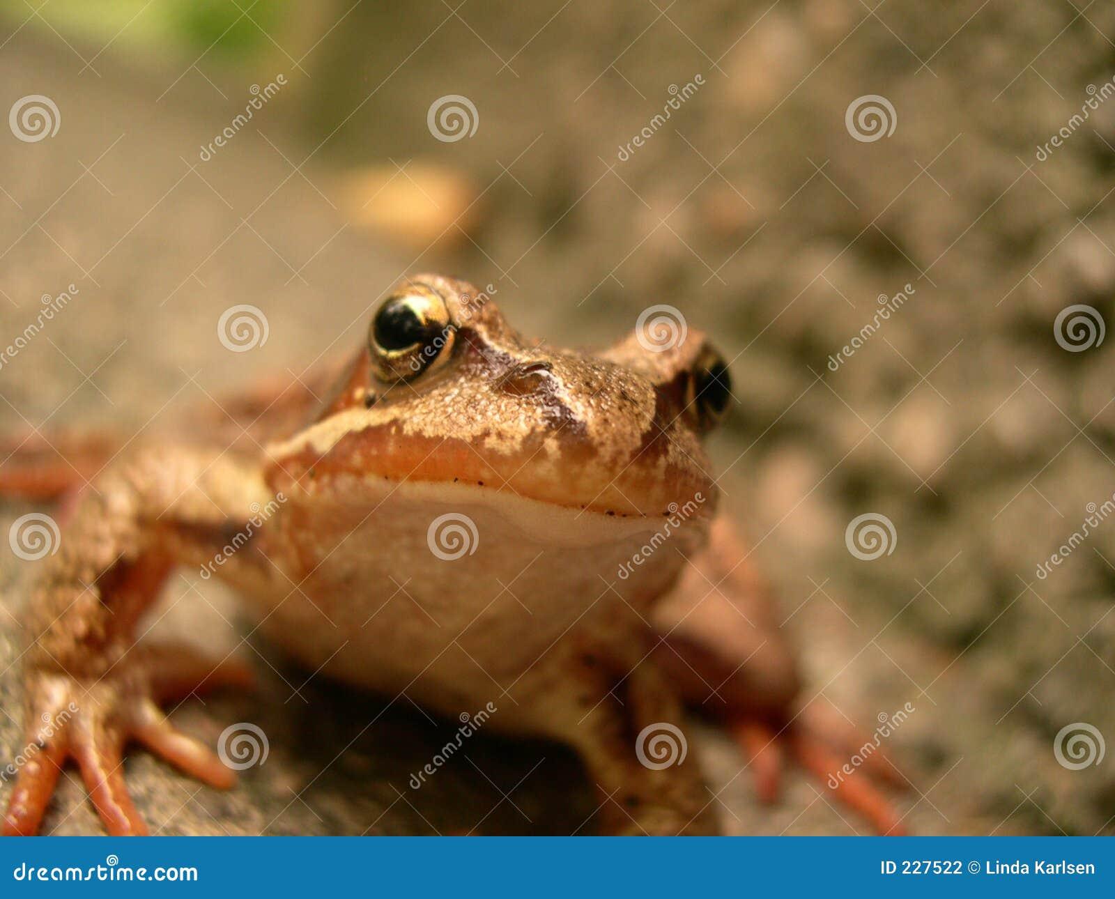 żaba szczęśliwa