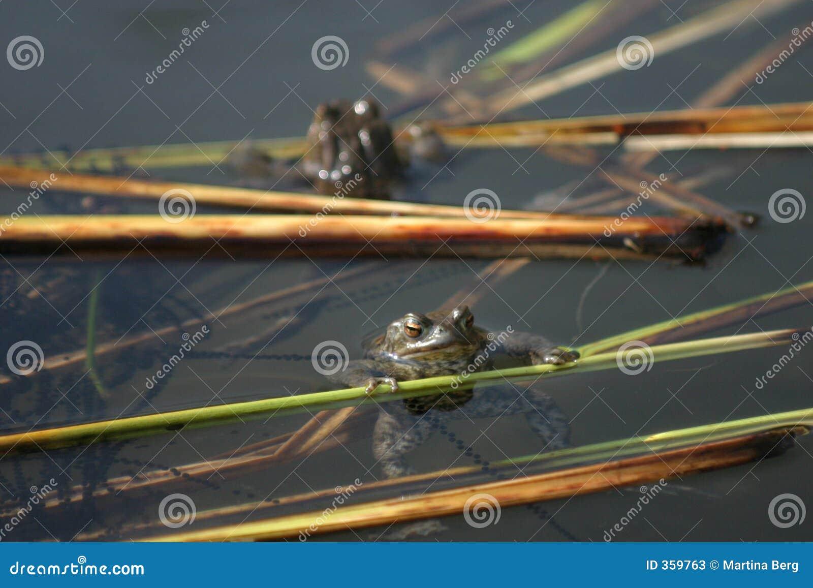 żaby ikra