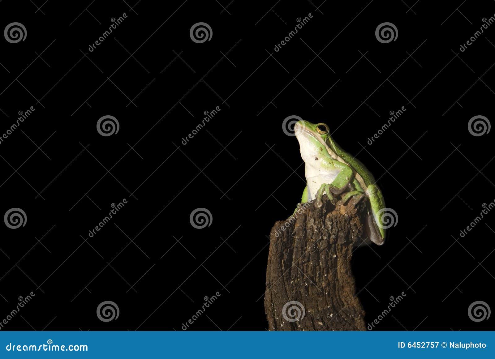 żaby zielone drzewa śnić