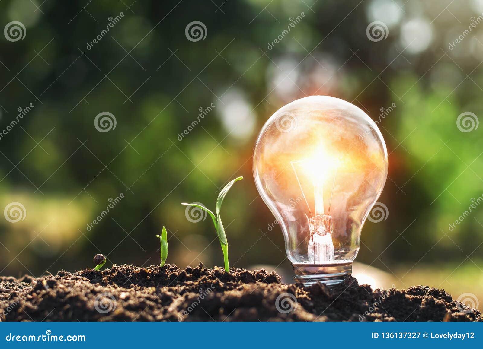 żarówka na glebowej i młodej rośliny dorośnięciu pojęcia oszczędzania energia