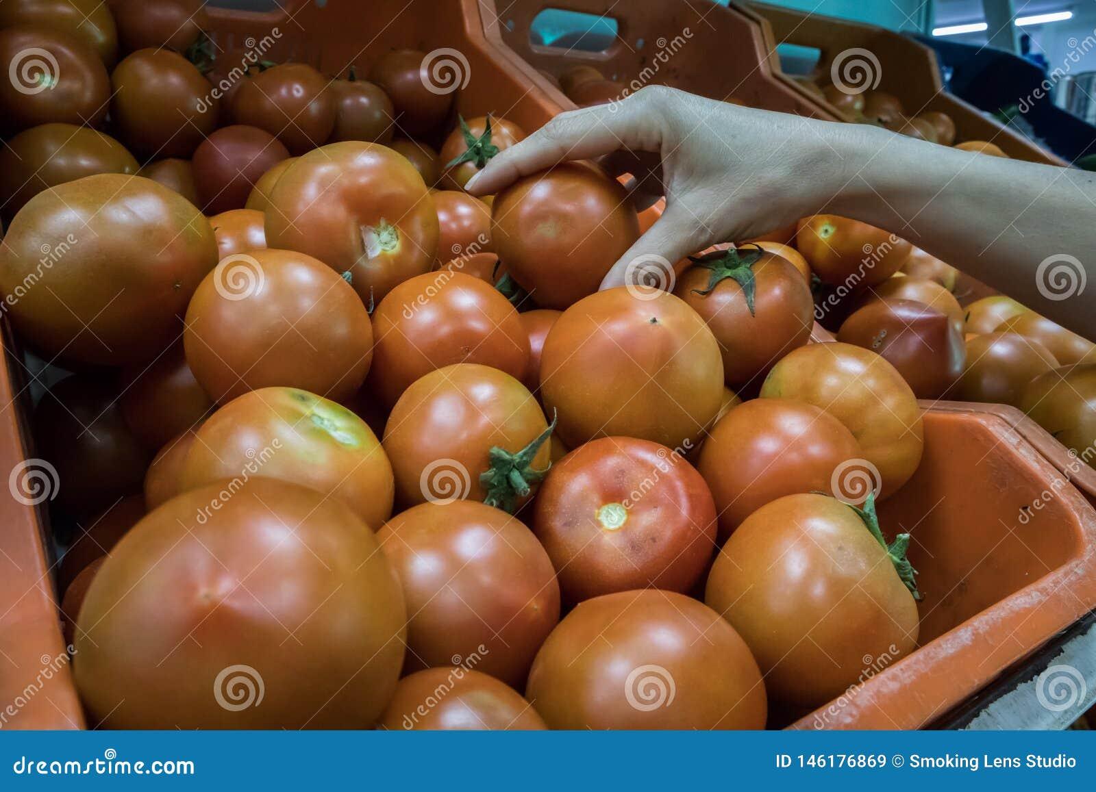 ?e?ska r?ka osi?ga szczyt pomidory w supermarkecie