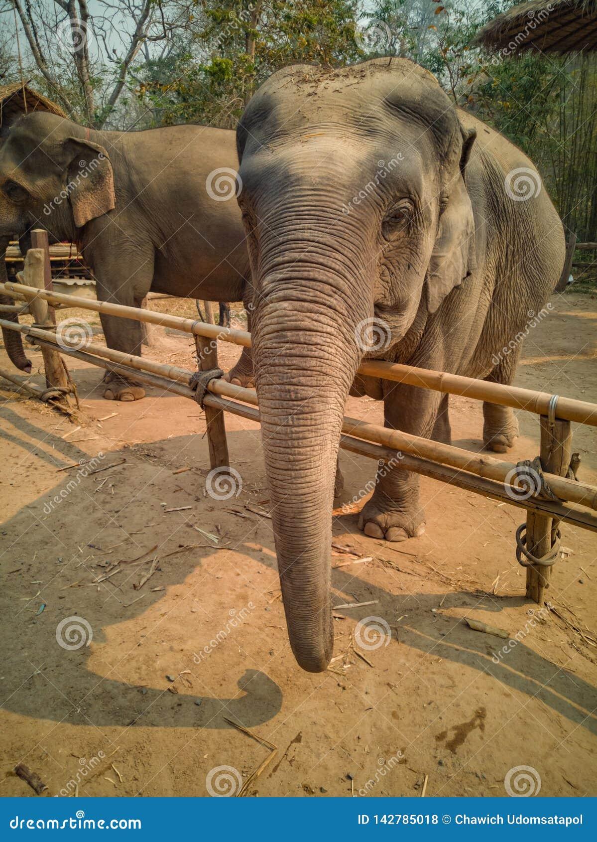 Żeński słonia spojrzenie życzliwy