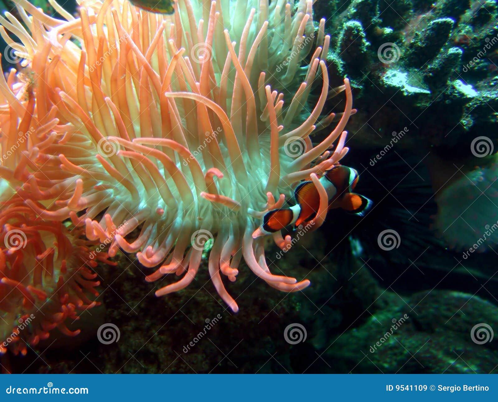 życia underwater