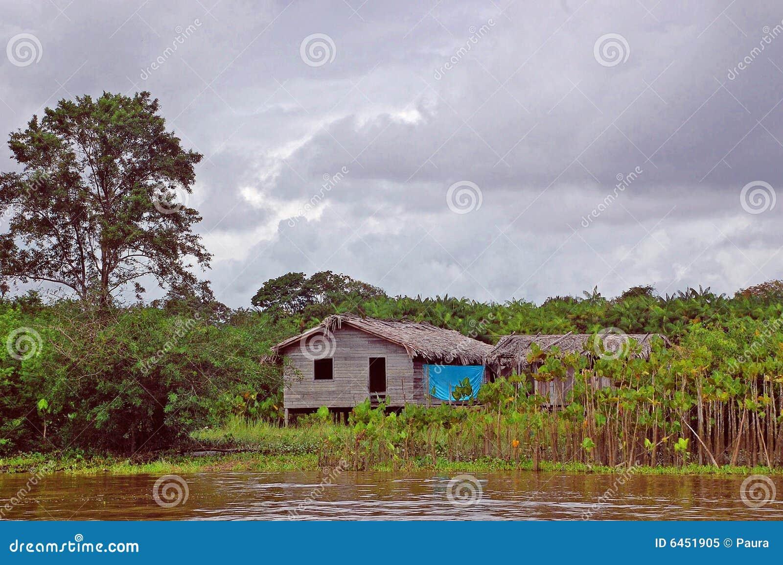 życie lasów deszczowych
