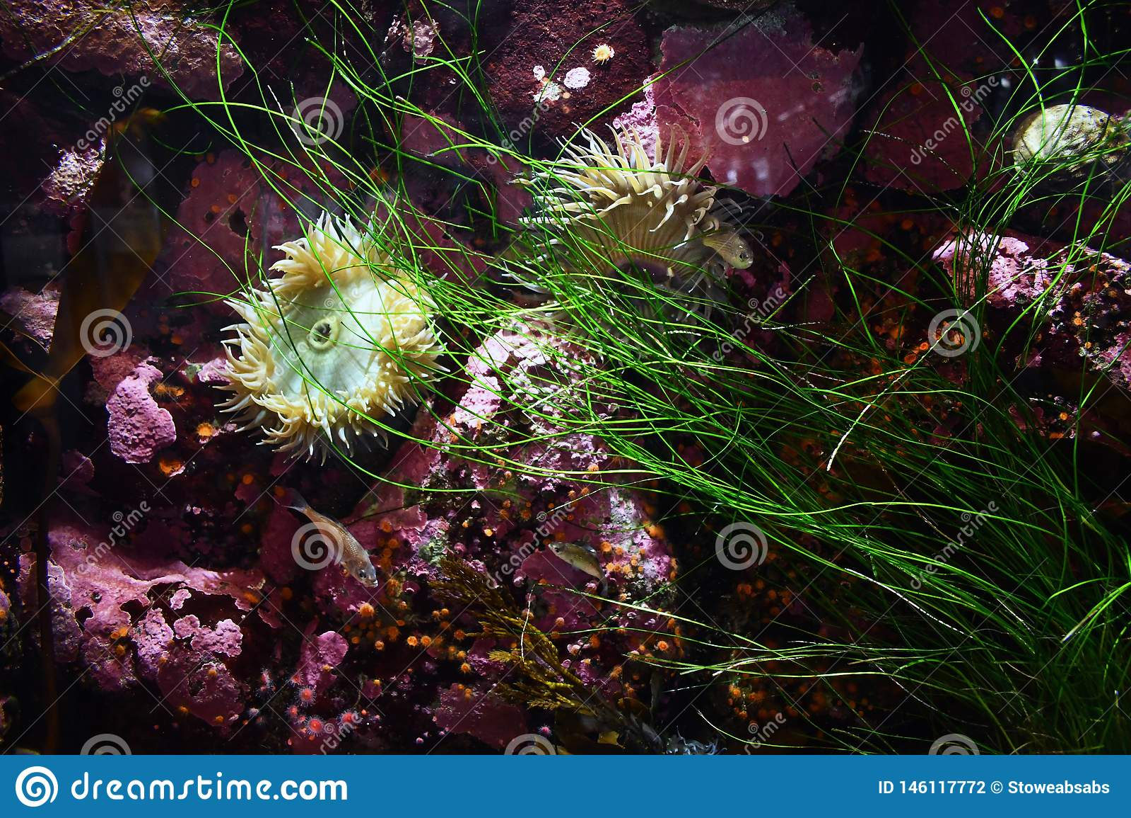 Życie na ocean podłodze