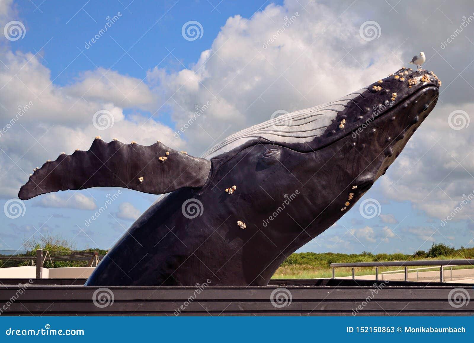 Życie sortował realistycznego skokowego baleen Humpback wieloryba figura z foką na głowie przy Ecomare dennego zwierzęcia sanktua