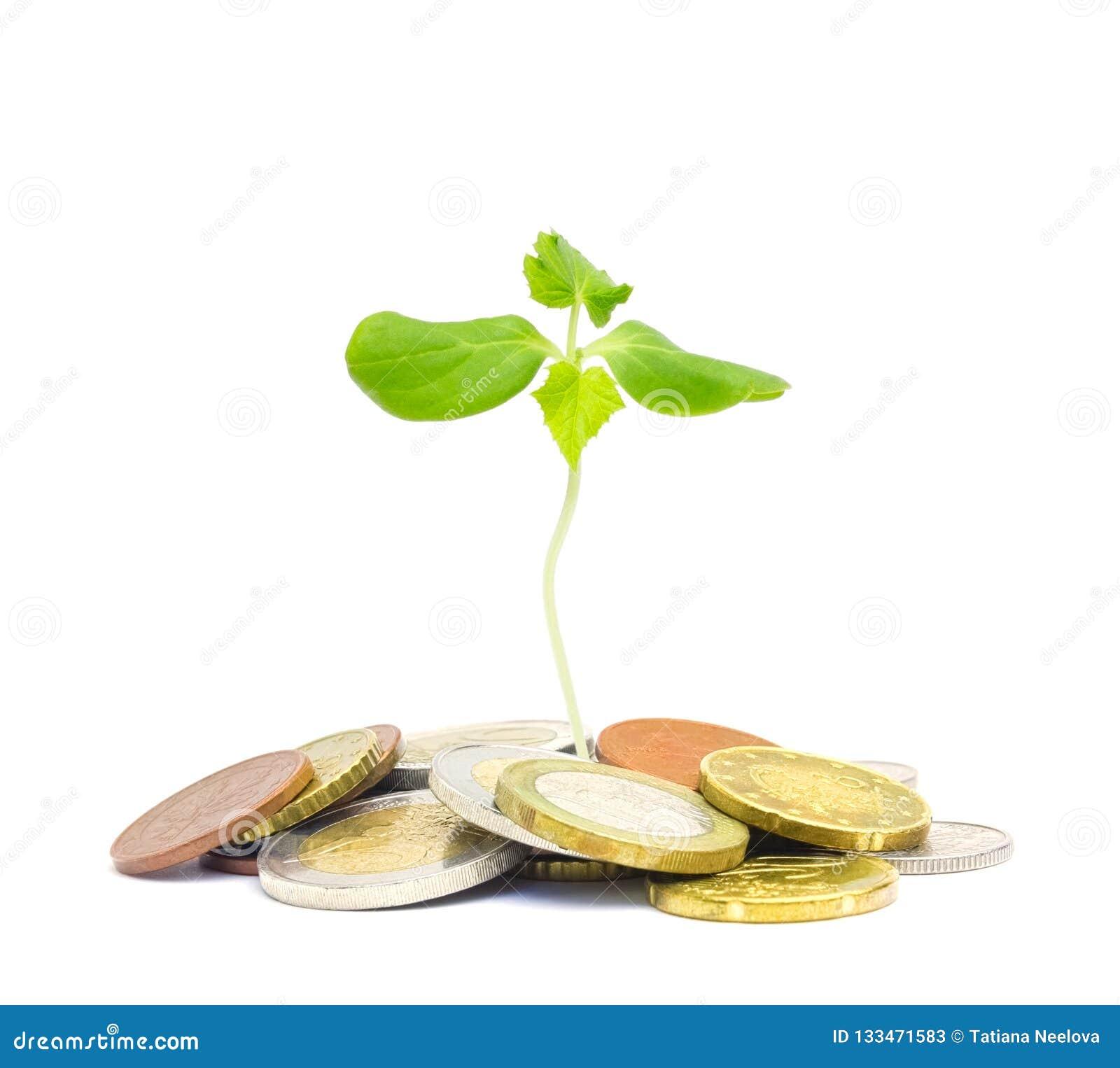 Żydowski dobroczynności pojęcie Tzedakah, tłumaczący jak dobroczynność Fotografia pieniądze, rozsypisko euro monety i mała zieleń